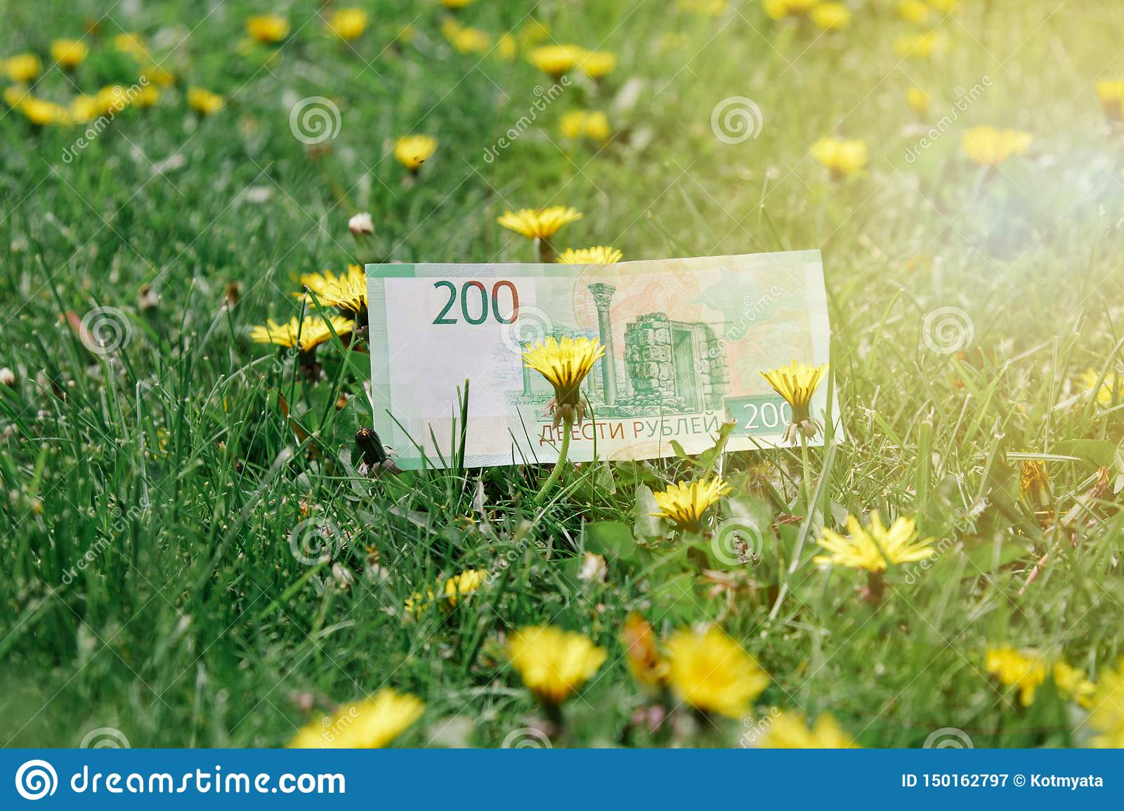 Russian rubles on green grass and dandelion fields