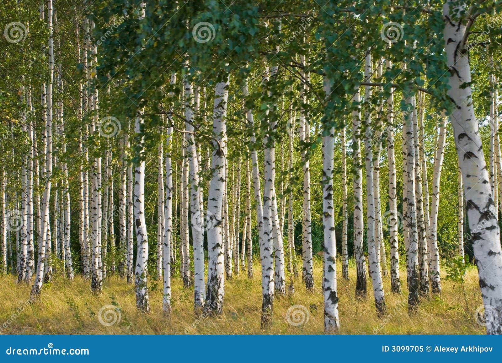 Дерево бруски для рукоятей стабилизированное дерево