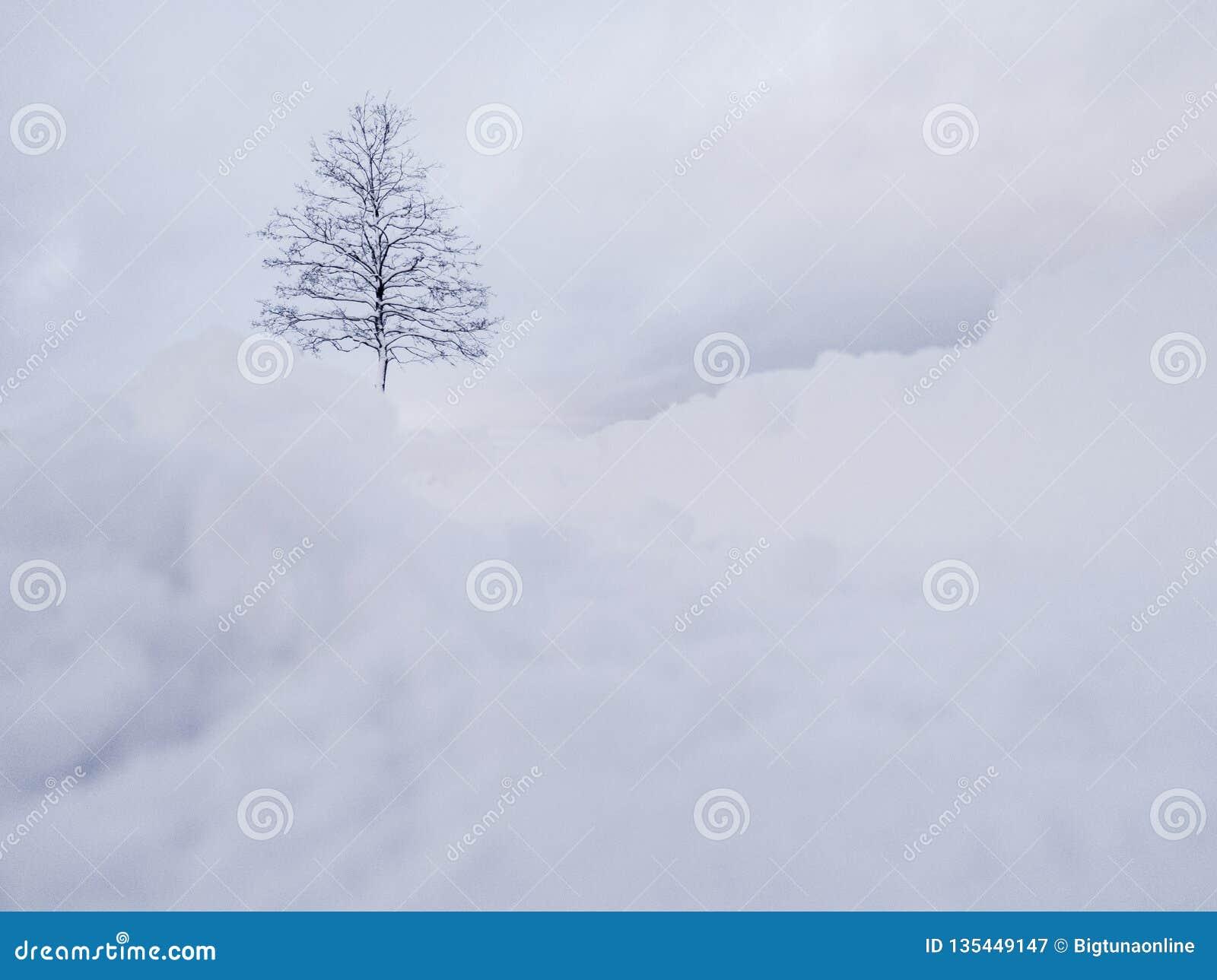 Russland, UralJanuary, Temperatur -33C Weißer Schnee über Baum Winterpanoramalandschaft mit Bäumen des Waldes
