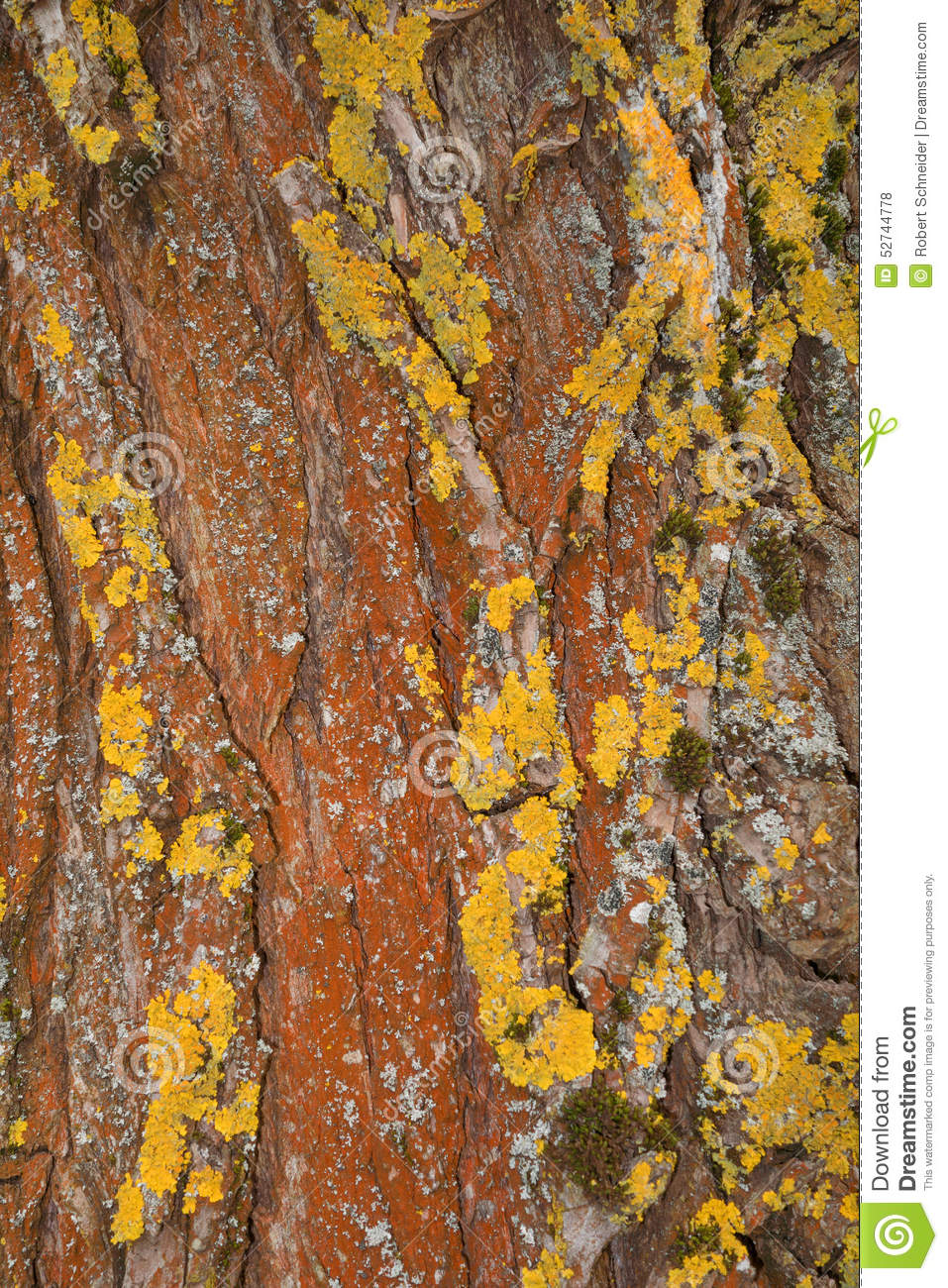 rust colored pattern in-#27