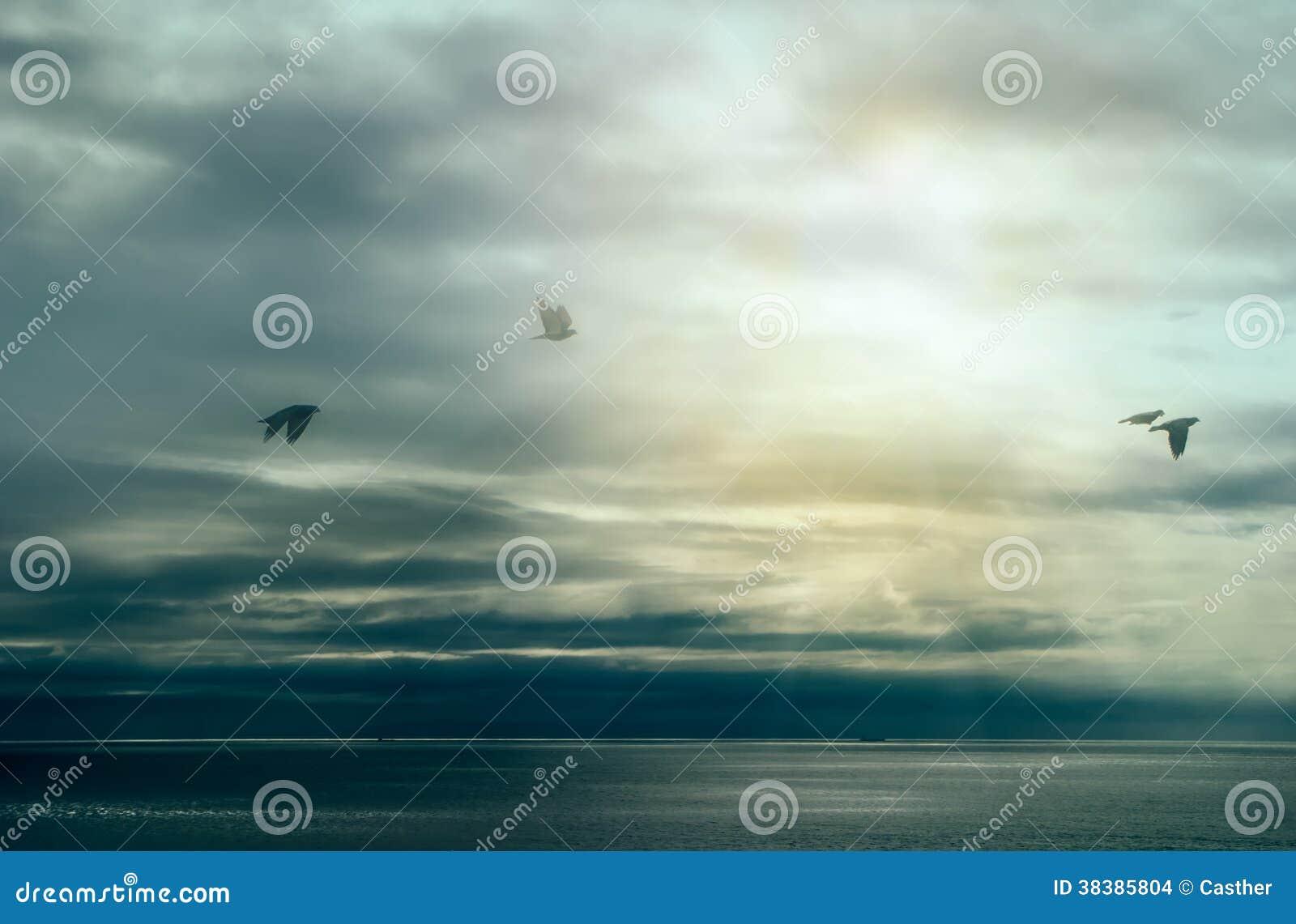 Rust na Onweer. Vogels die over Oceaan met Onweerswolken vliegen. Zal