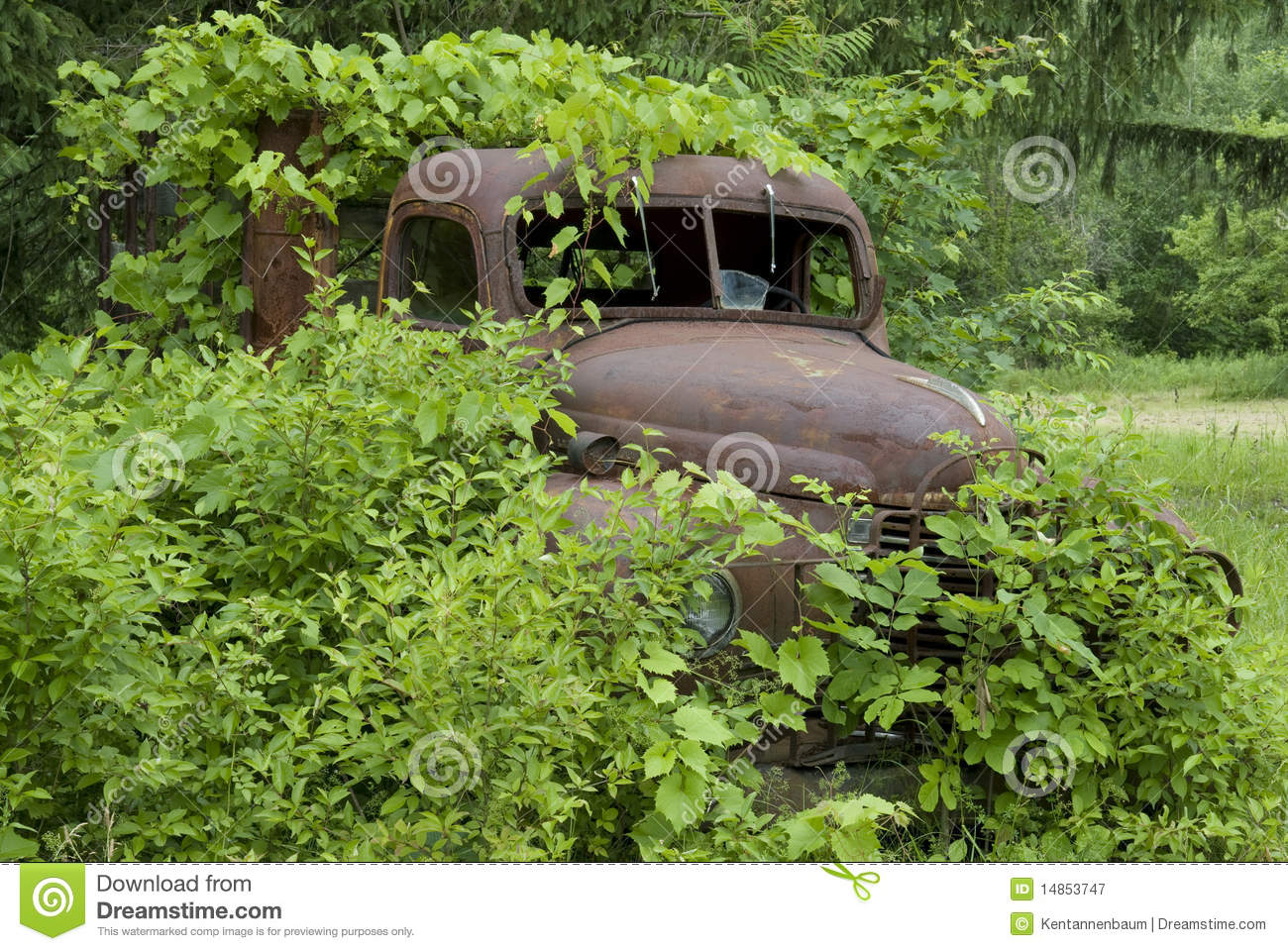 Rusted truck buried in foliage_2