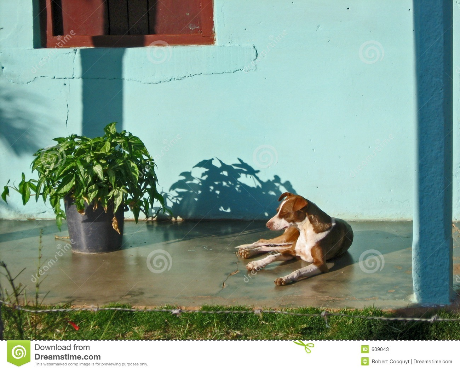 Rustende hond.