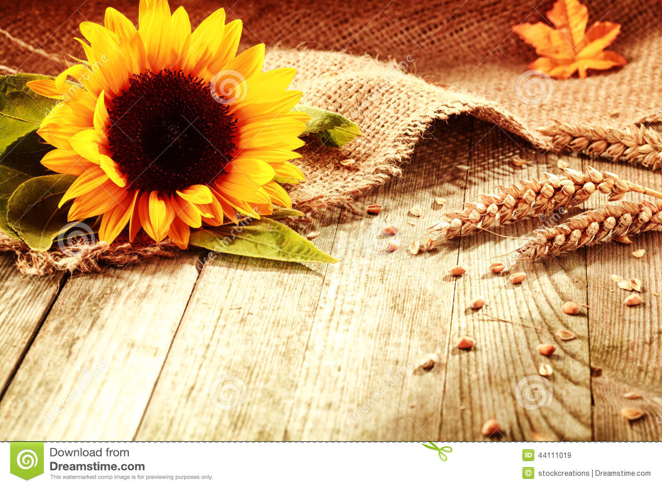 Rustic Background With A Sunflower And Wheat Stock Photo 44111019