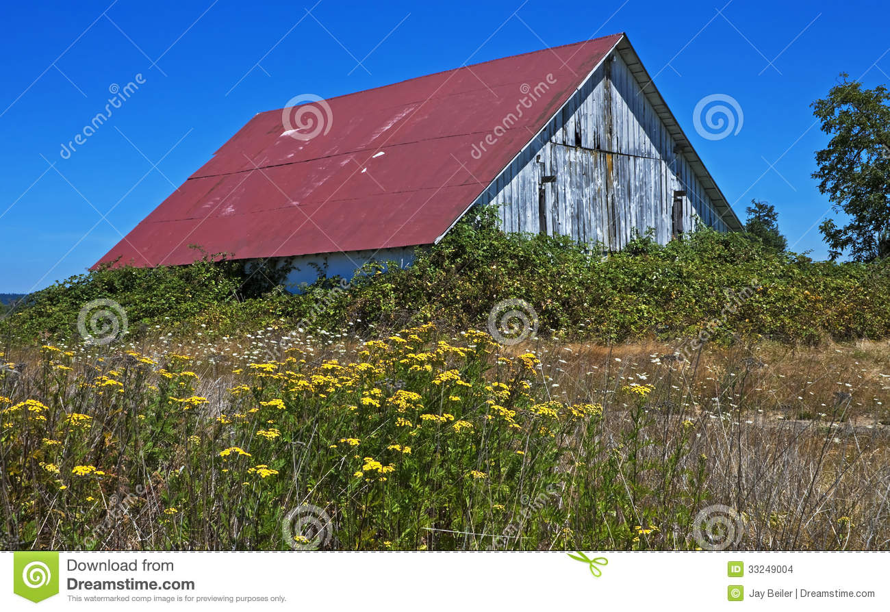 Conannsv P further Conan The Barbarian Facts as well Rustic Barn Vines Summer Wildflowers Smothered Blackberry Near Albany Oregon besides Conan further Image. on c a