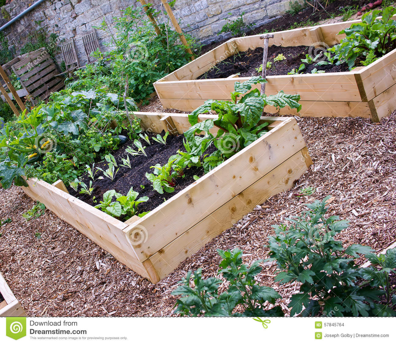 Rustic Country Vegetable Flower Garden With Raised Beds Stock Photo Image 57845764