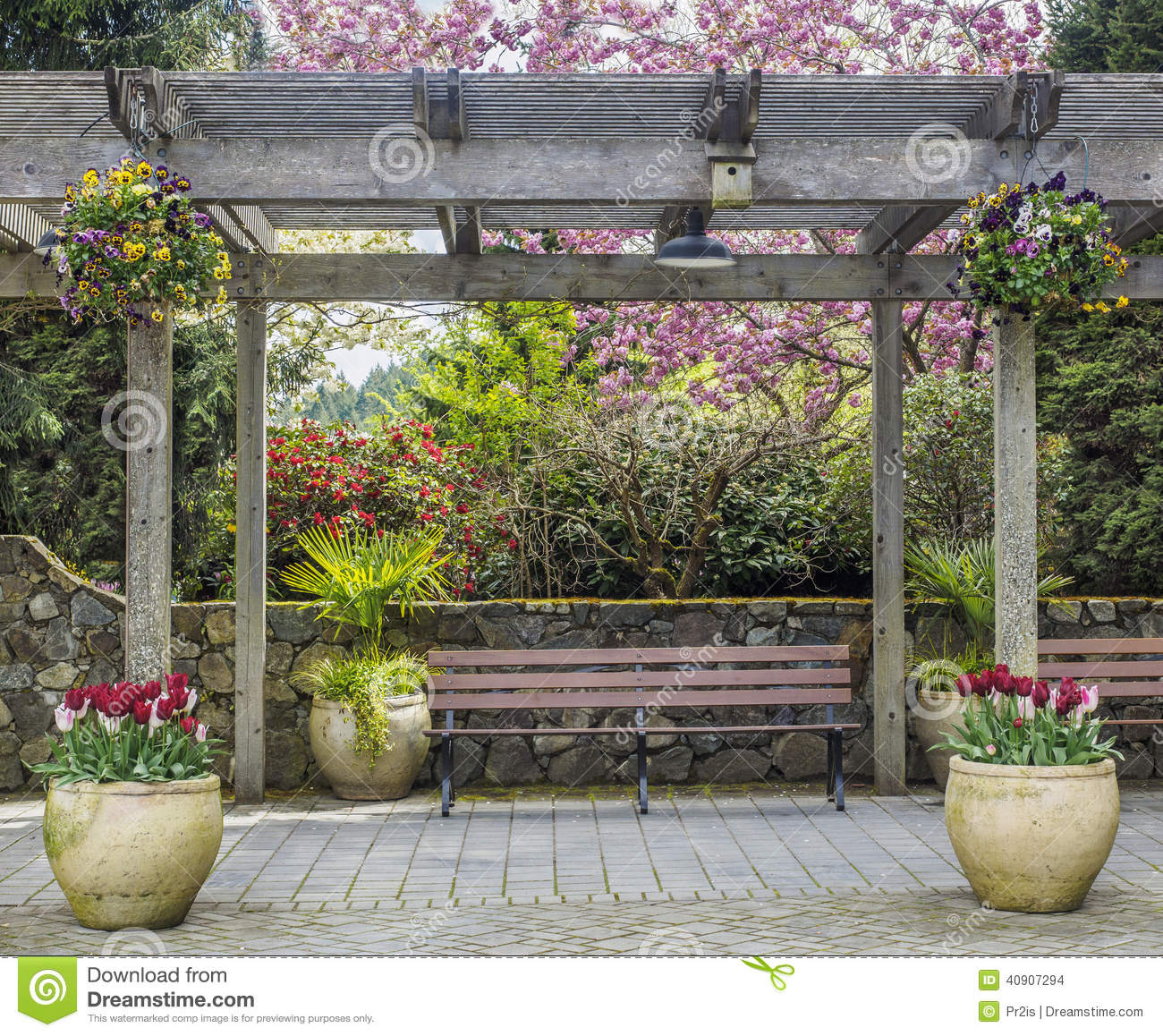 Rustic Pergola With Bench And Flower Pots Under Blossoming Cherry Tree Stock Image