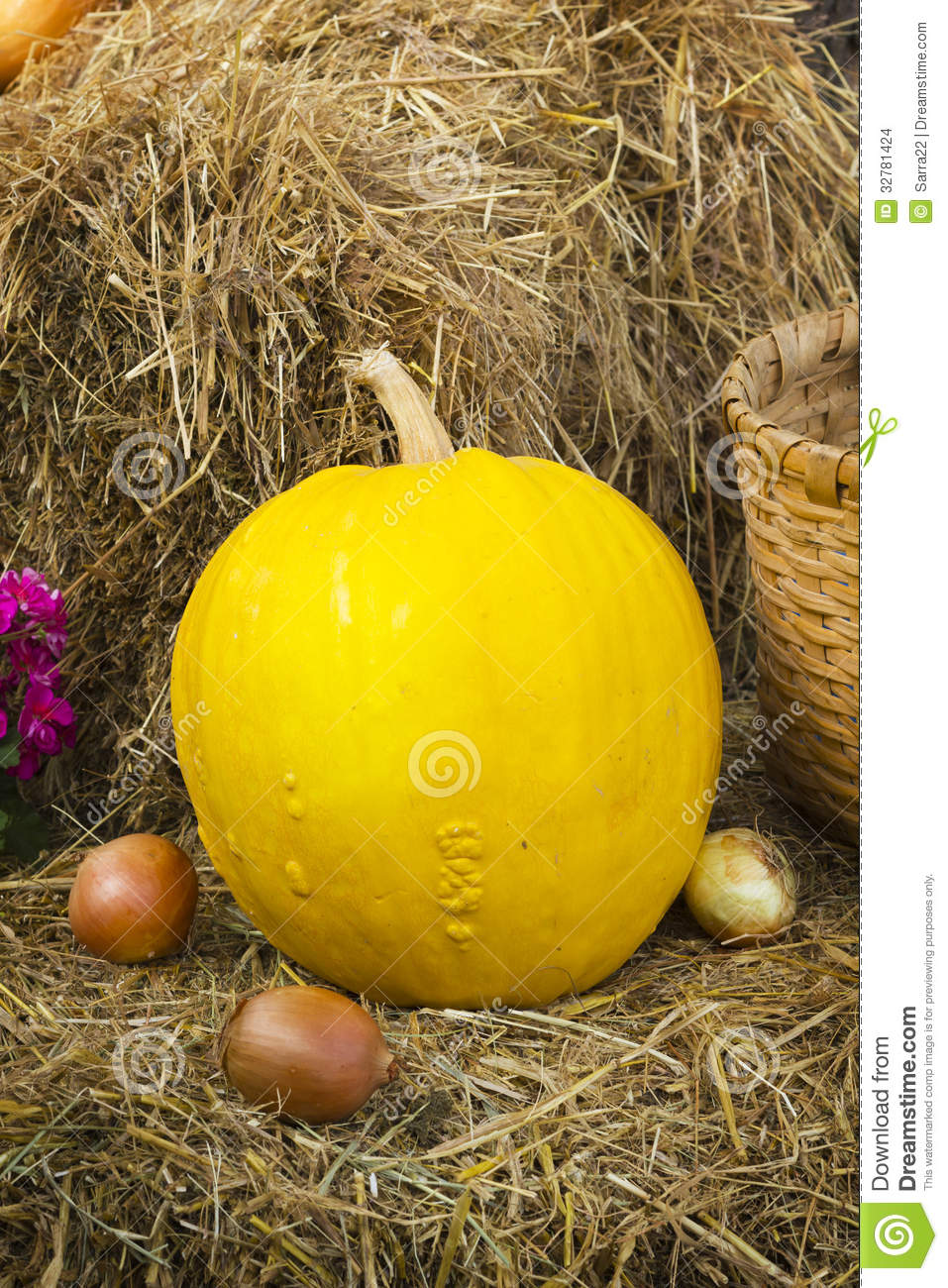 Rustic Still Life With Pumpkin Stock Photo Image Of