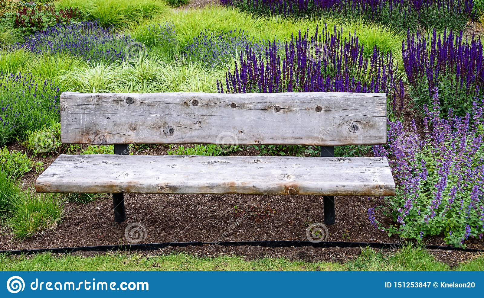 Astonishing Rustic Wood Garden Bench Surrounded By Ornamental Grasses Ncnpc Chair Design For Home Ncnpcorg