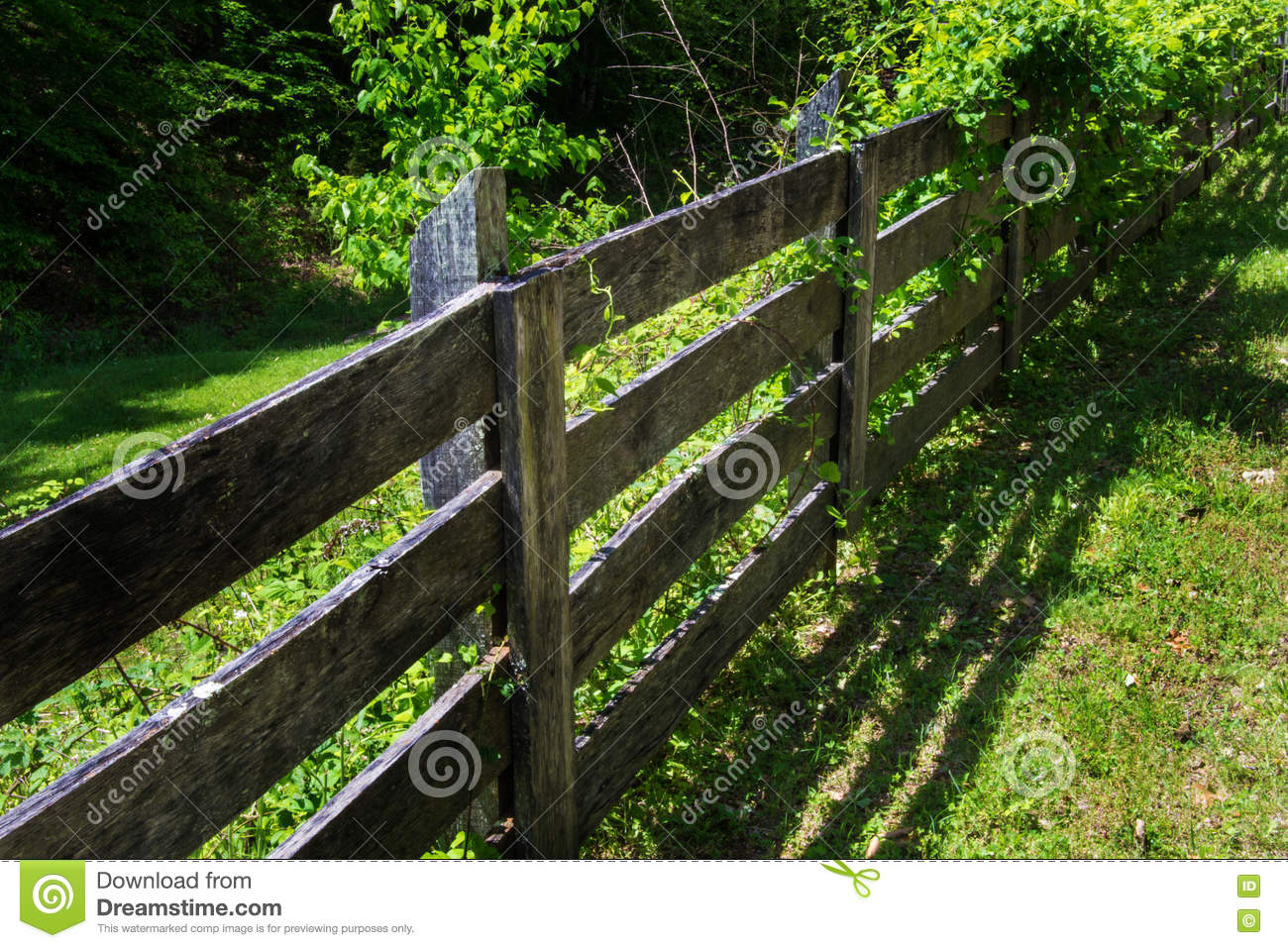 Rustic wooden fence and raspberry vines stock photo image 71468831 - Rustic wood fences a pastoral atmosphere ...