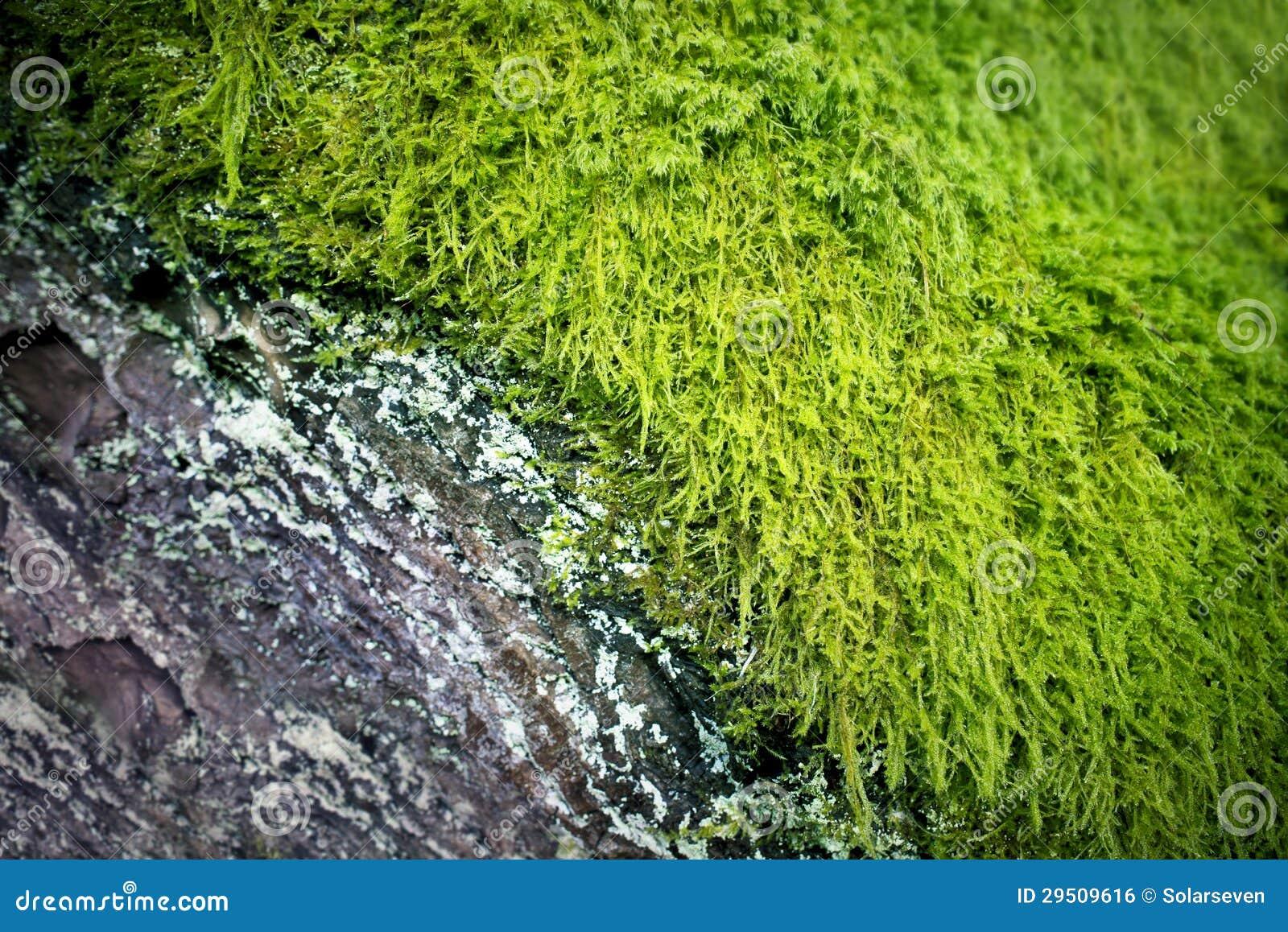 Rustieke Oude Schors & Groen Mos