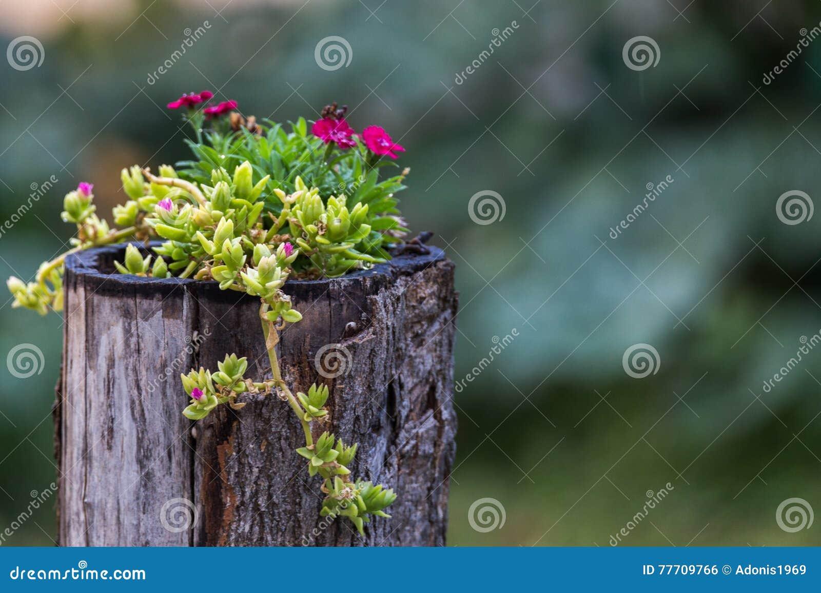 Rustieke pot van bloemen