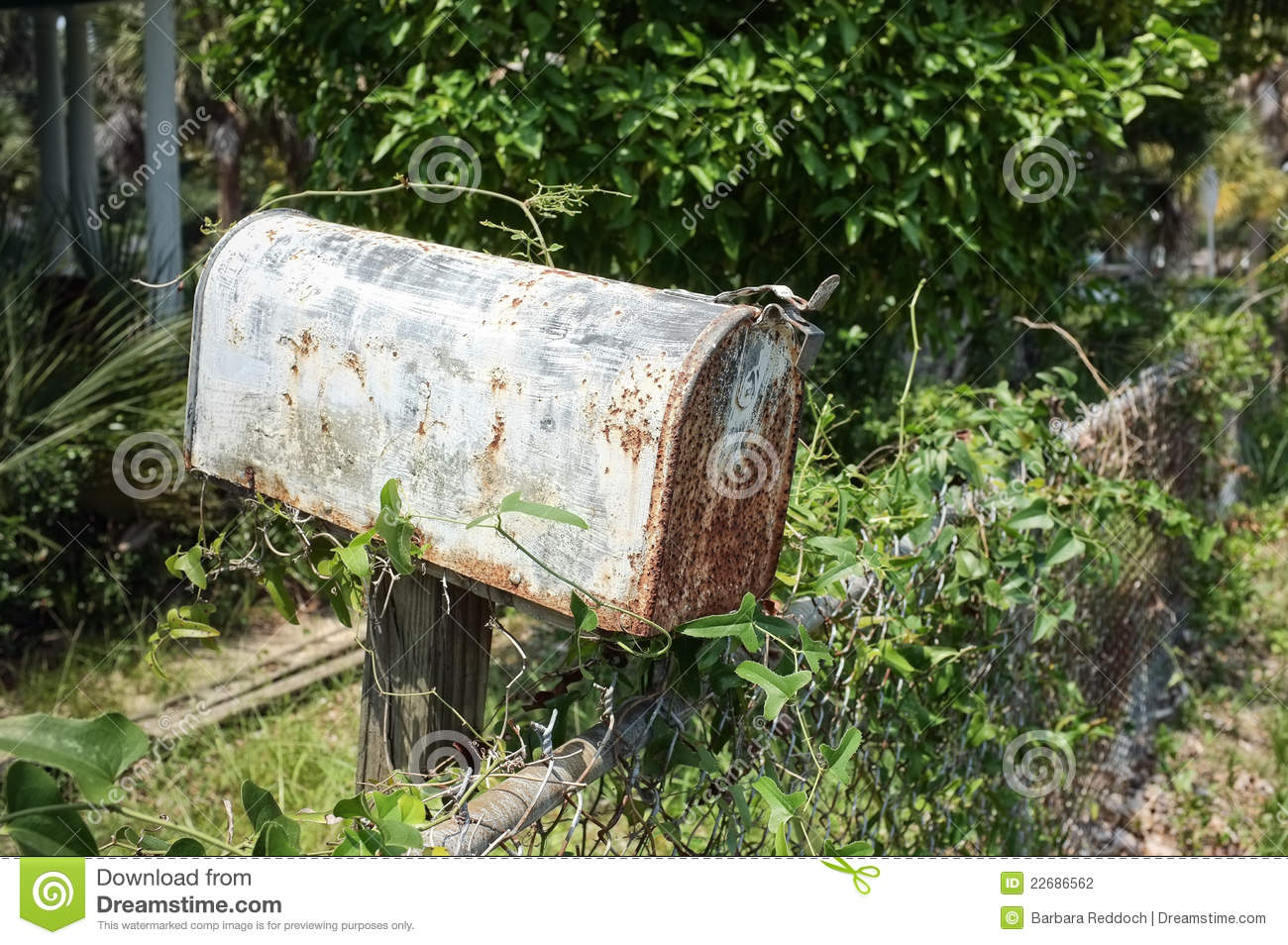 Rusty mailbox next to a chain link fence. Vines and overgrown yard in ...