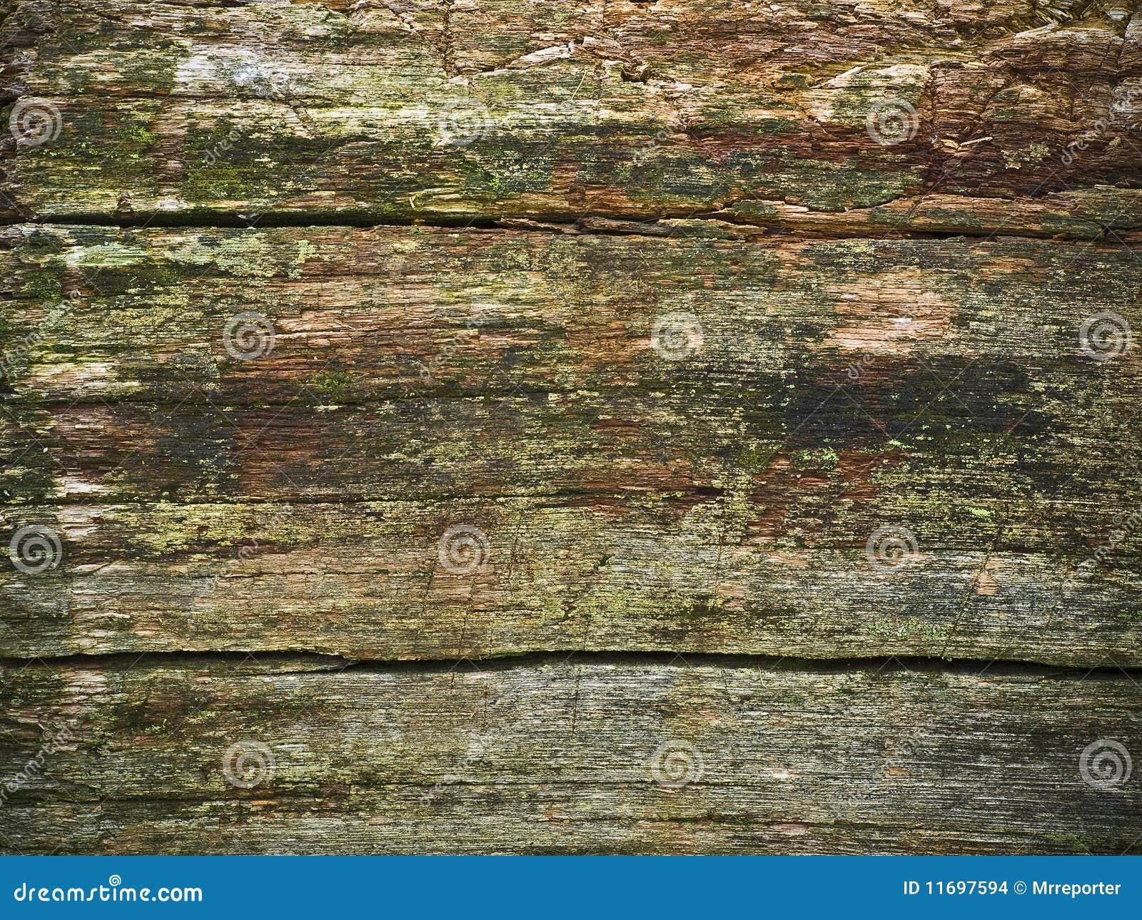 Ruttet trä