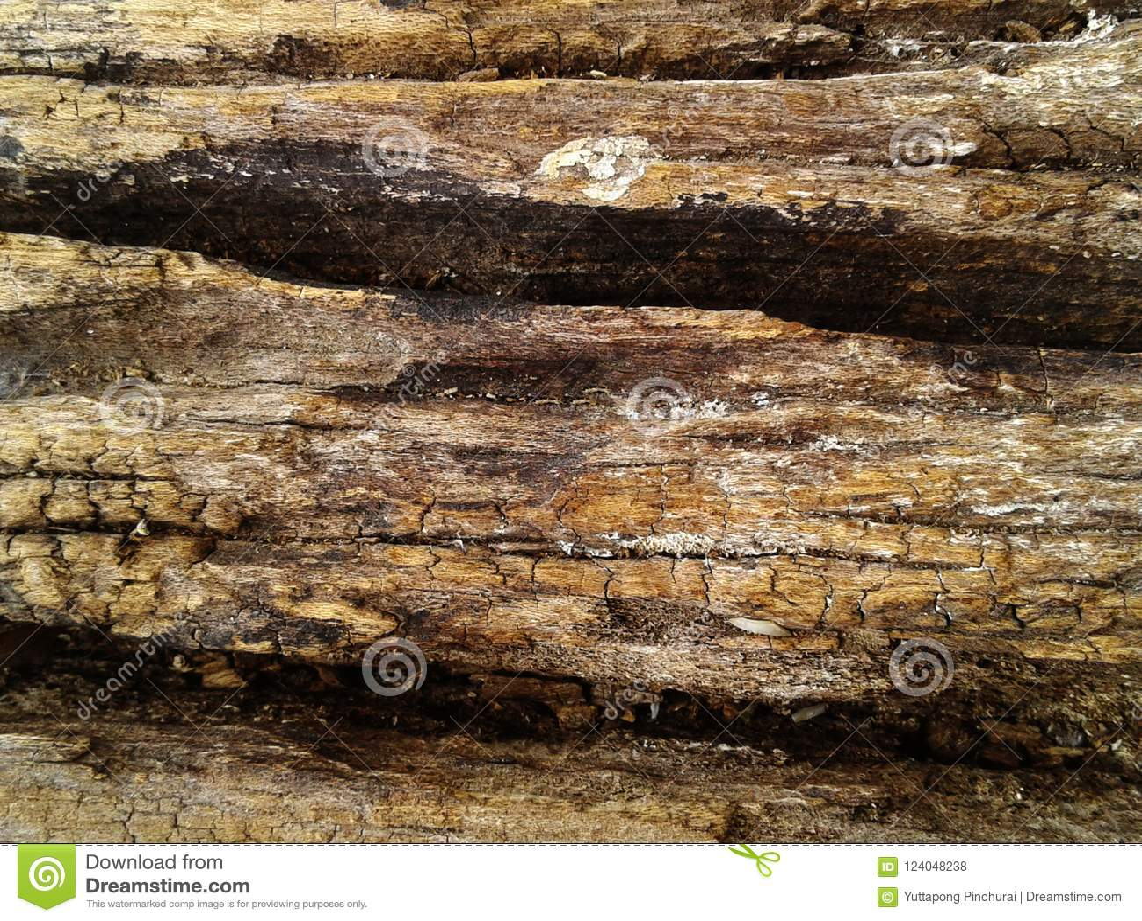 Ruw silicified houten oppervlaktetextuur De achtergrond van de foto