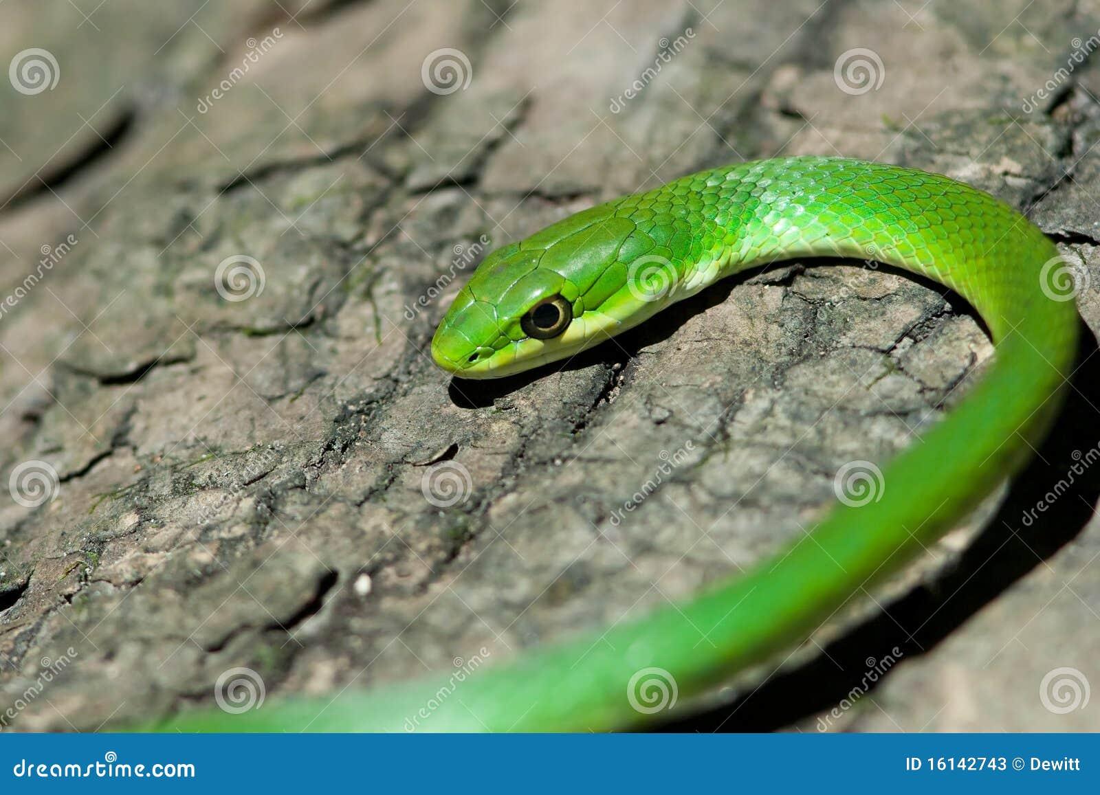 Ruwe groene slang