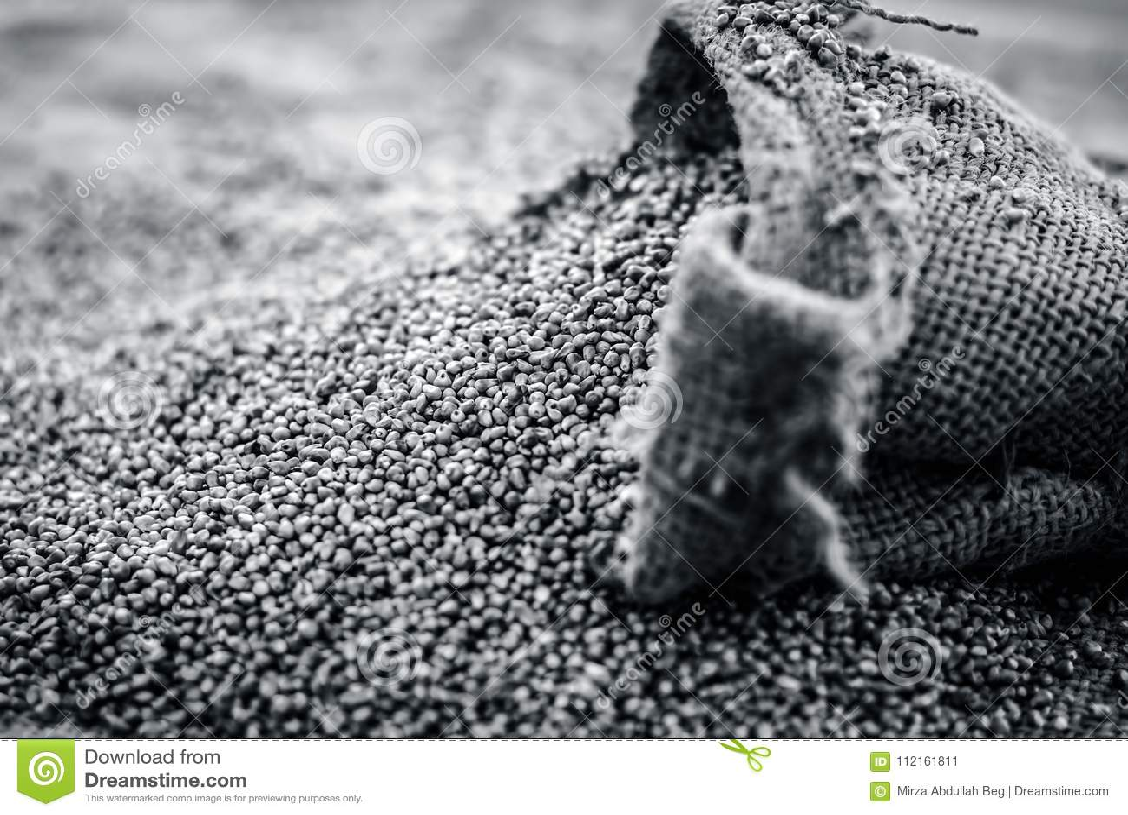 Ruwe organische Pennisetum-glaucum, Parelgierst die uit een jutezak komen Concept Honger