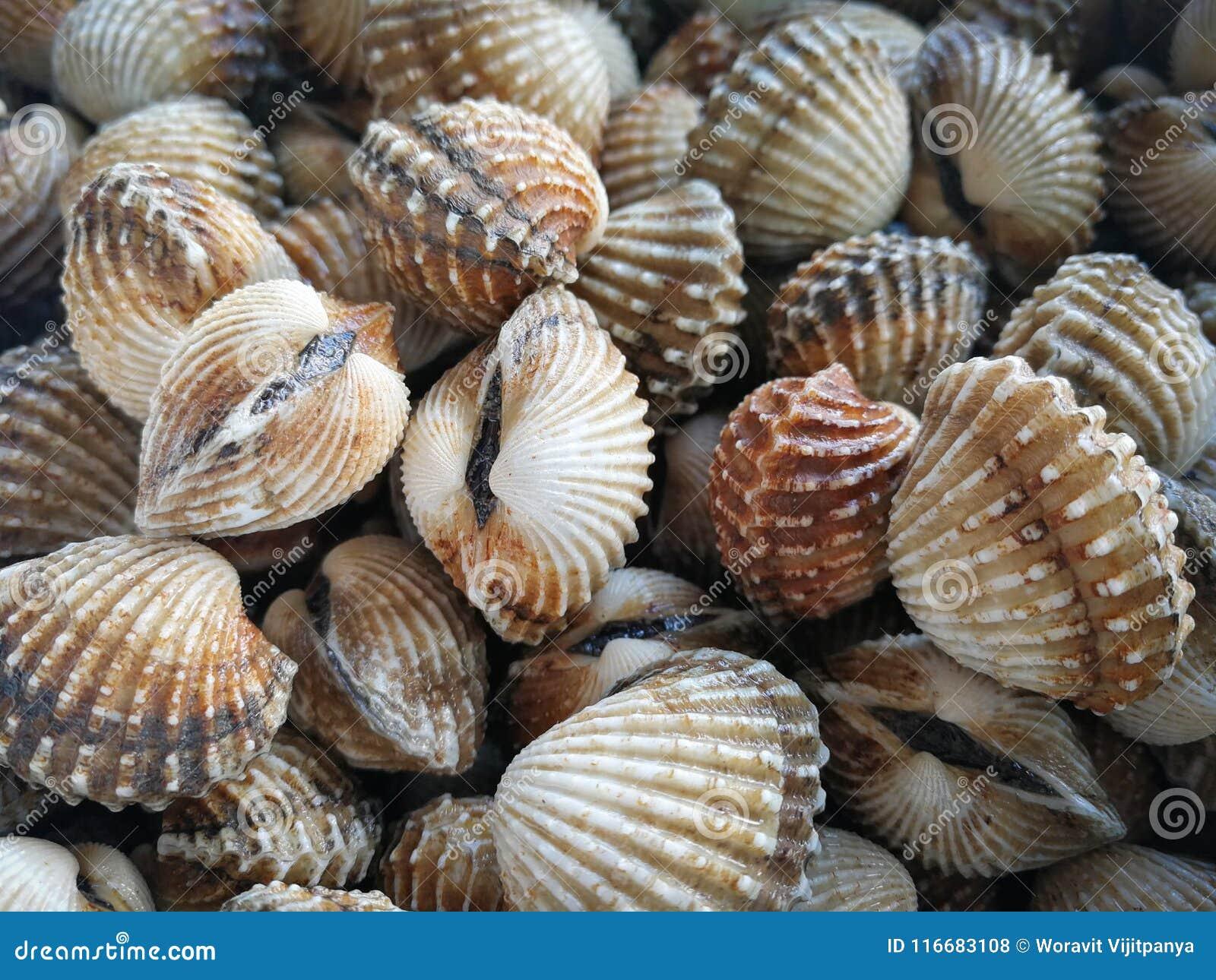 Ruwe overzeese kokkelstweekleppige schelpdieren