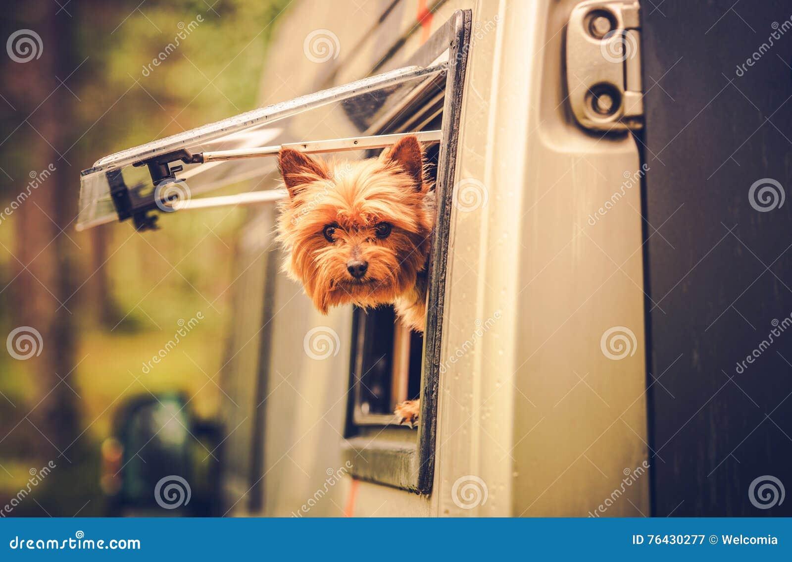 Rv-Reise mit Hund