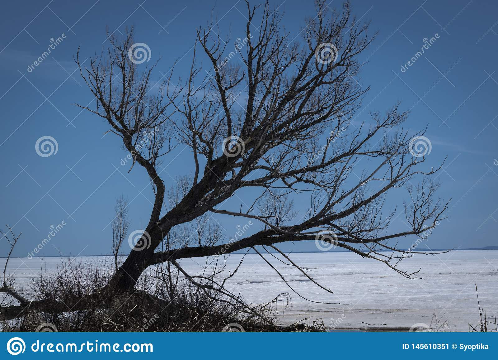 ?rvore no lago Nipissing