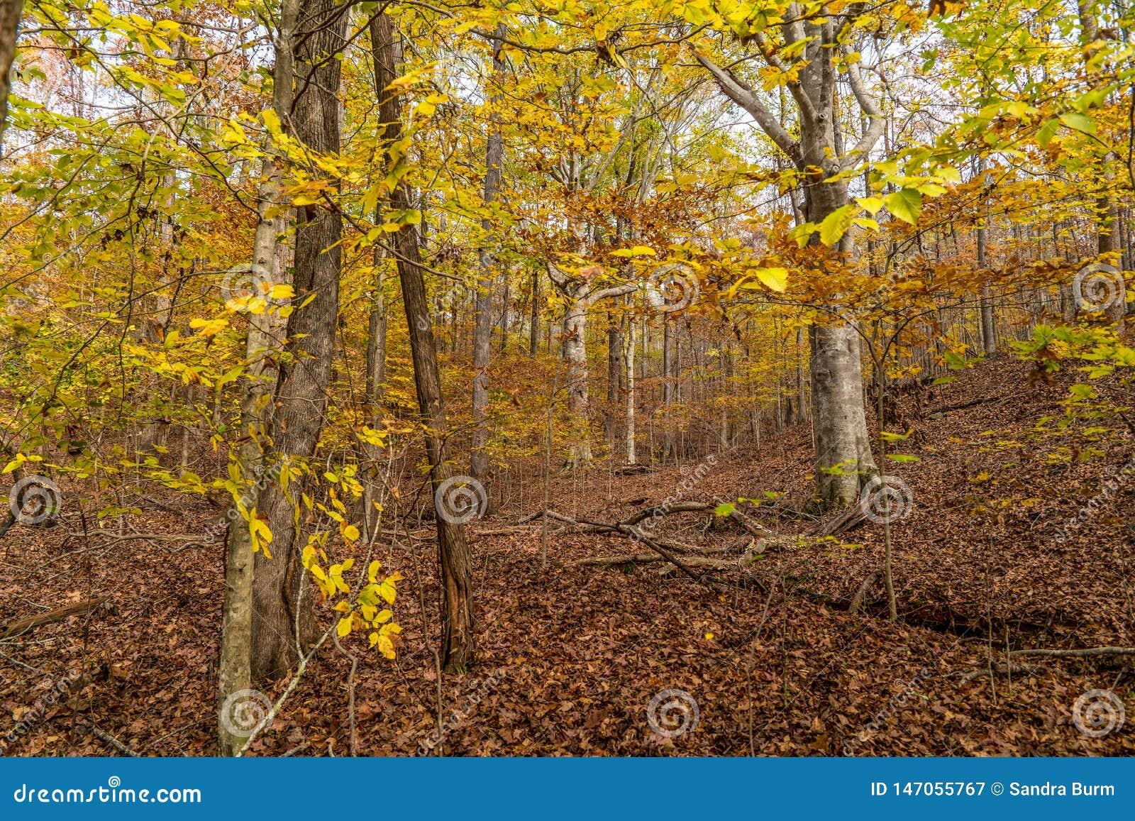 ?rvores coloridas do outono