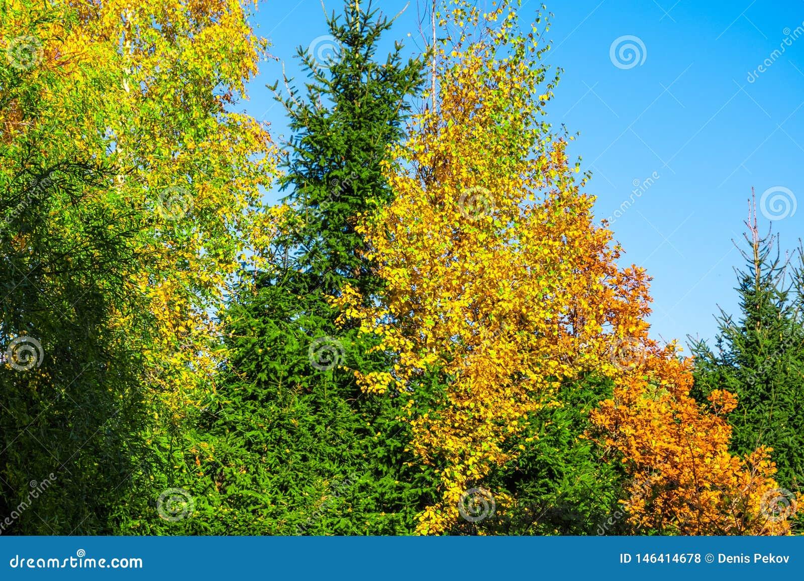 ?rvores do outono no parque