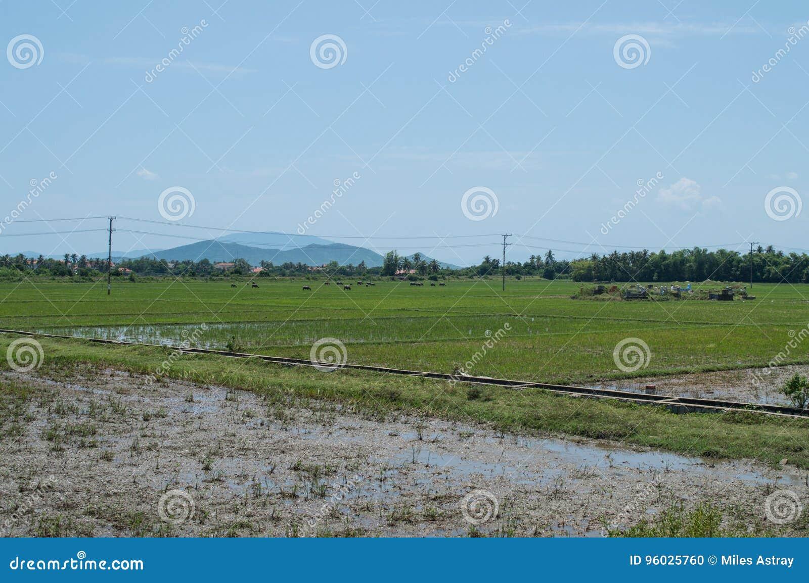 Ryżowi irlandczycy, Wodni bizony, wioska i cmentarz blisko Nha Tran,