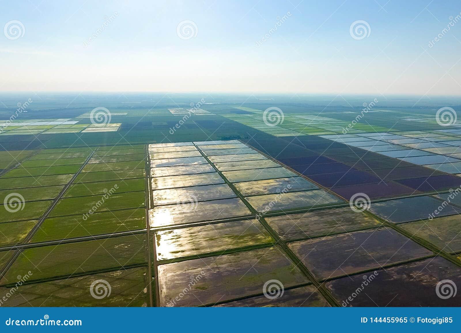 Ryżowi pola zalewają z wodą Krajobraz przed słońcem Zalewający ryżowi irlandczycy Agronomic metody rosnąć ryż wewnątrz