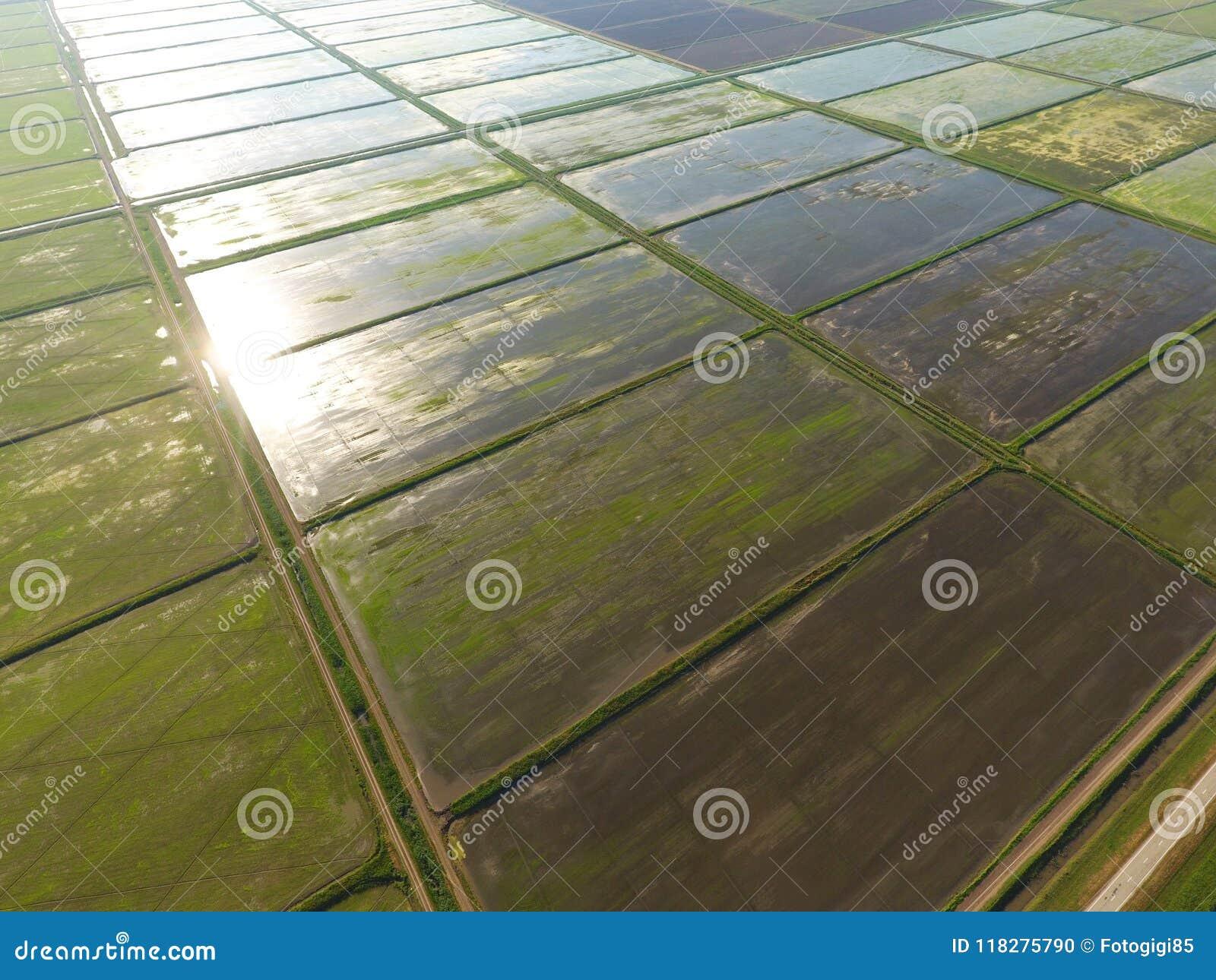 Ryżowi pola zalewają z wodą Zalewający ryżowi irlandczycy Agronomic metody rosnąć ryż w polach