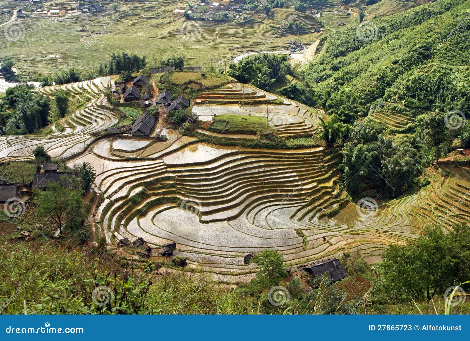 Ryżowi Tarasy, Sumy Pa, Wietnam