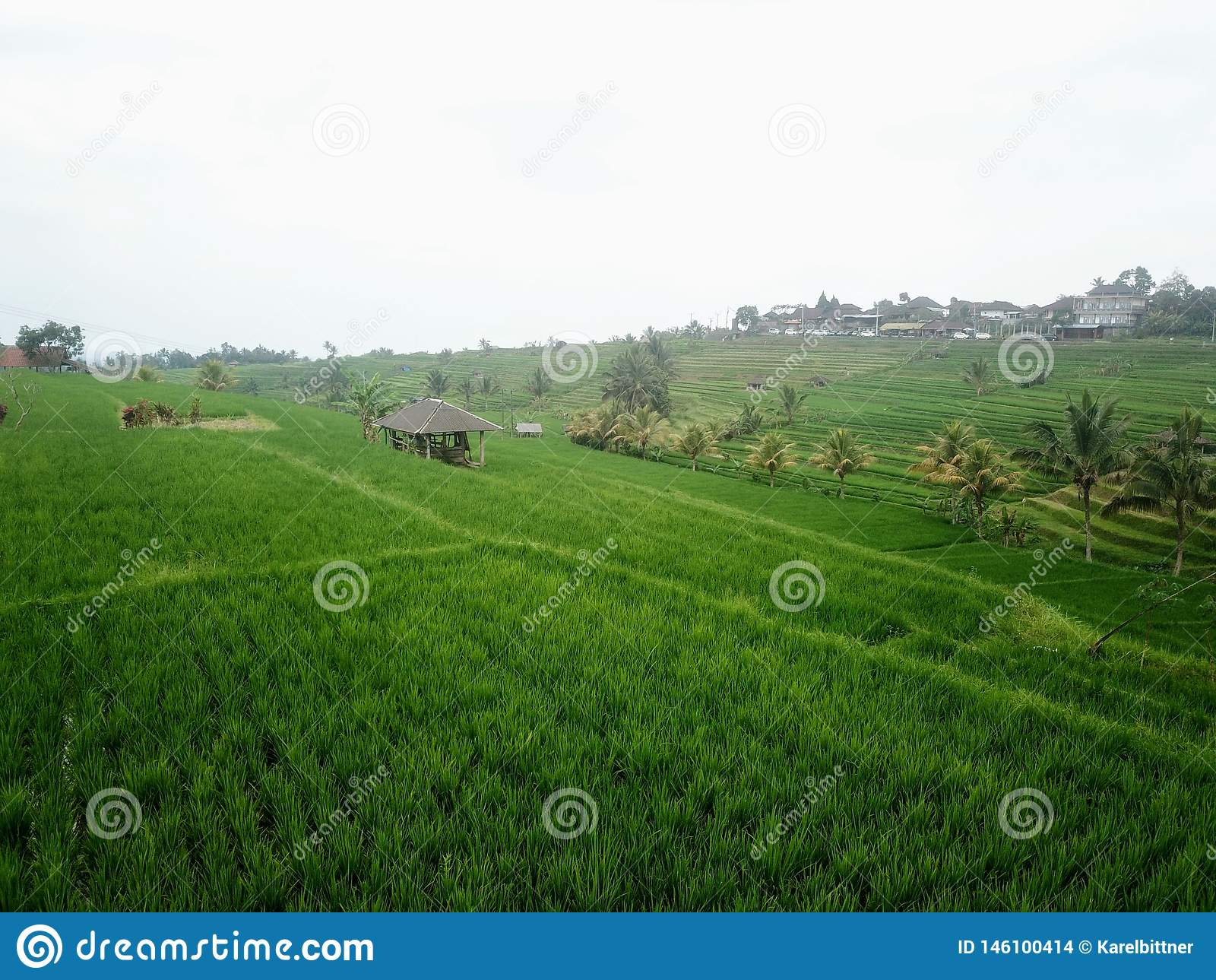 Ry?owi tarasy Jatiluwih w g?rach Bali wyspa w Indonezja