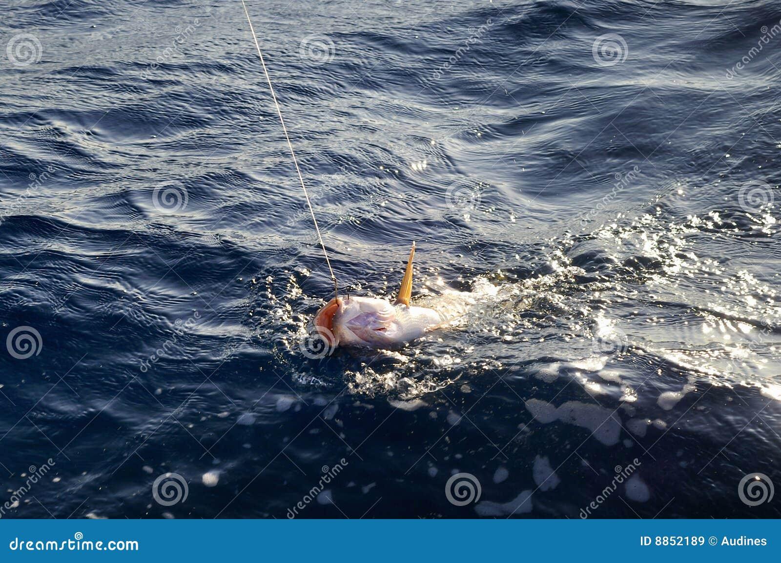 Ryba hacząca