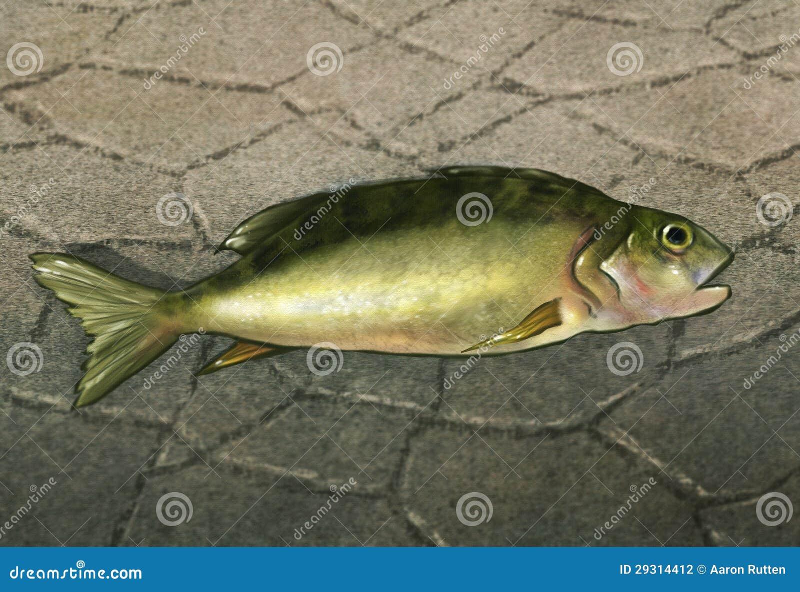 Ryba Z wody - Cyfrowej grafika