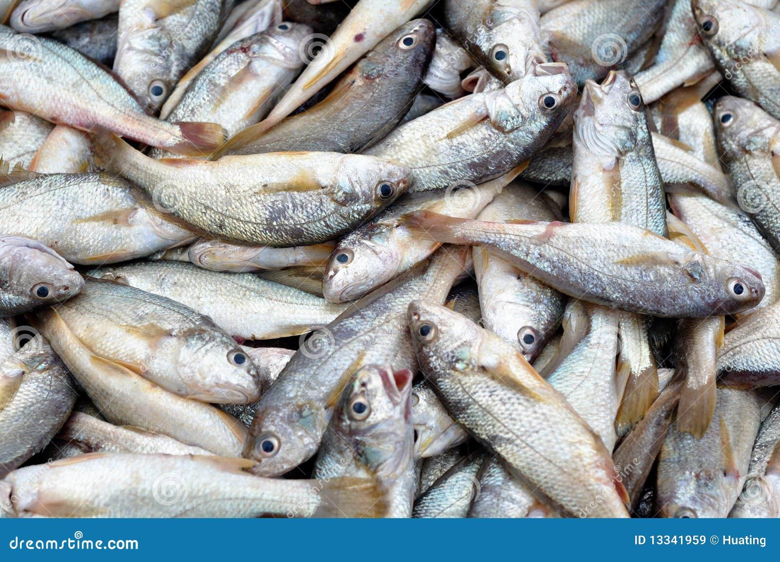 Rybi świeży