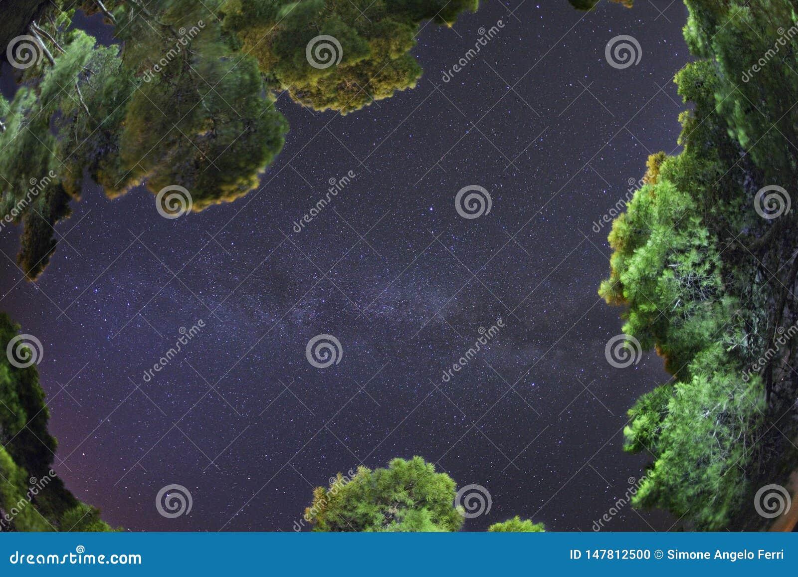 Rybiego oka obiektyw na drodze mlecznej między sosny San domina lasową wyspą Tremiti archipelag Apulia, Włochy to jest realem