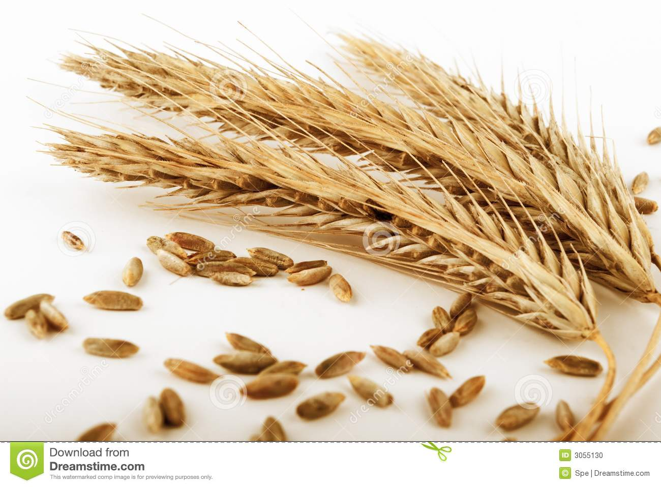 Rye Ears And Grains Stock Photo - Image: 3055130
