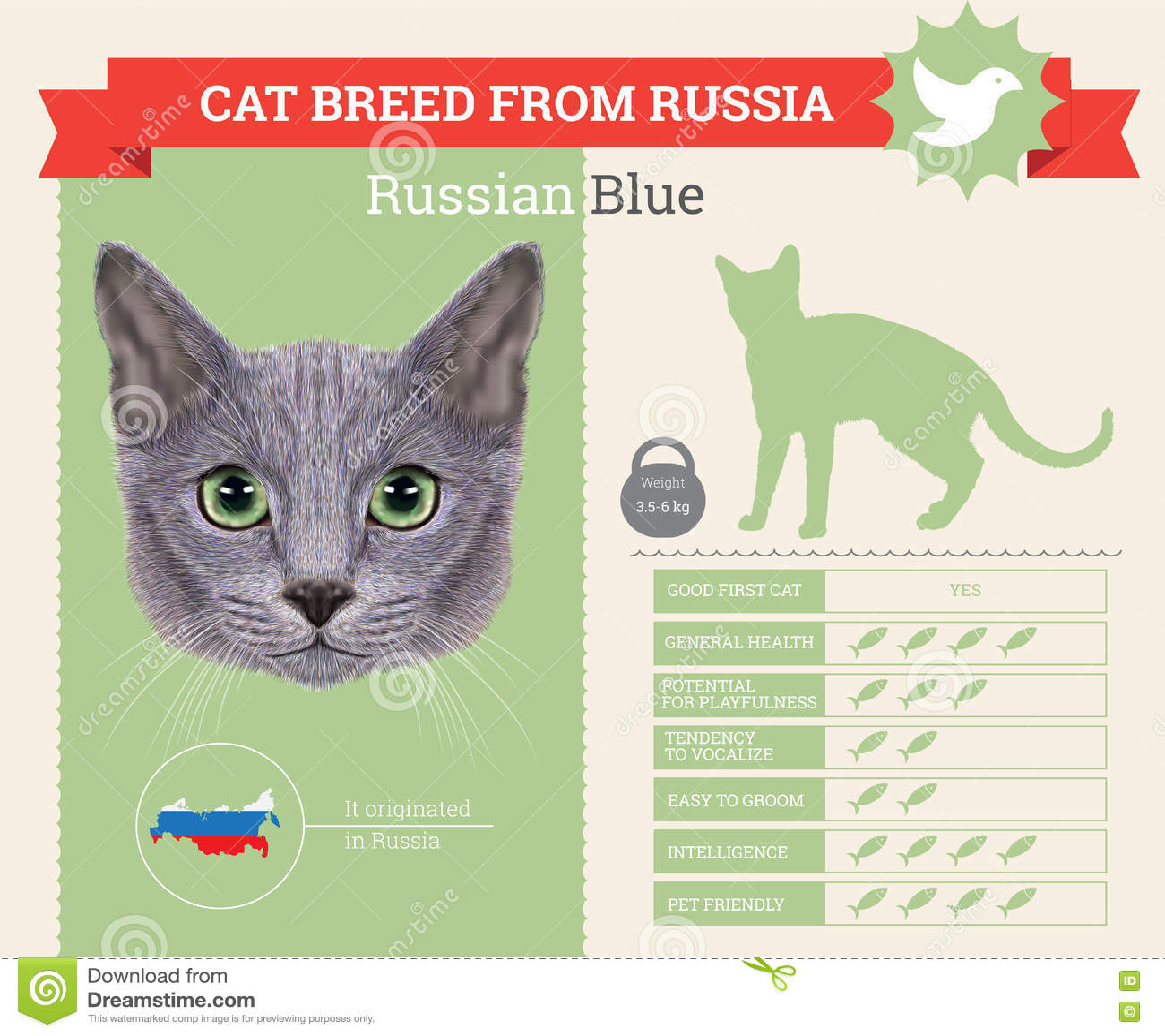 Rysk avelinfographics för blå katt