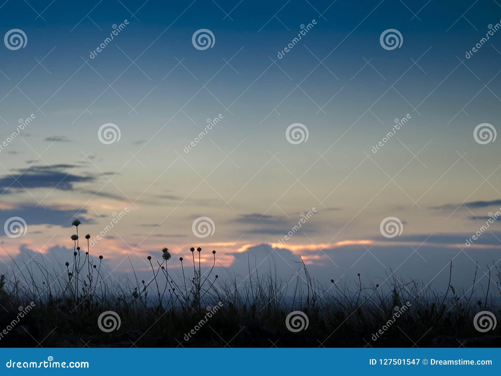 Ryssland Sommarsolnedgång i natur Fantastisk solnedgång över en sjö nära en grön äng