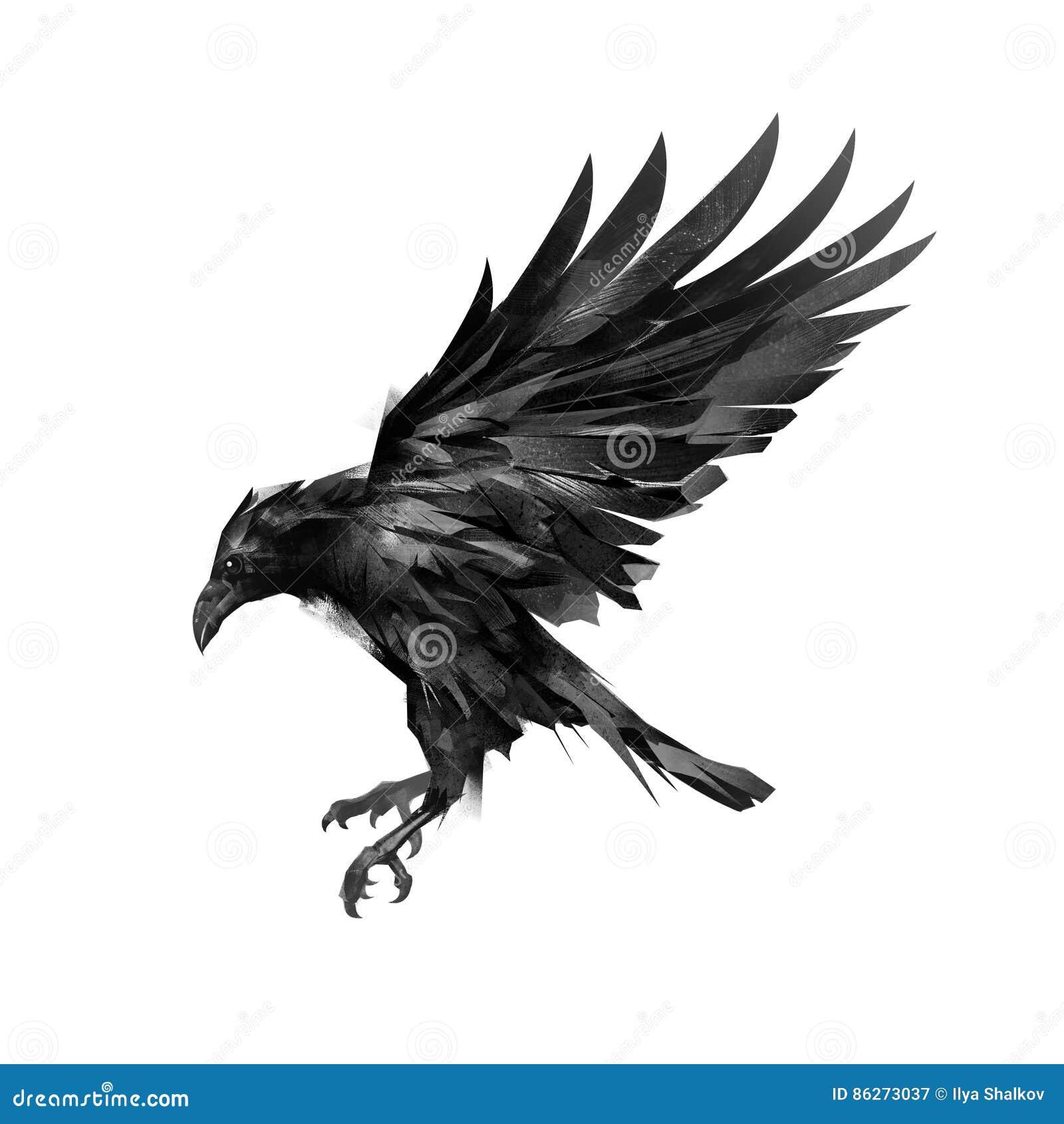 Rysujący nakreślenie latający czerń gaworzy na białym tle