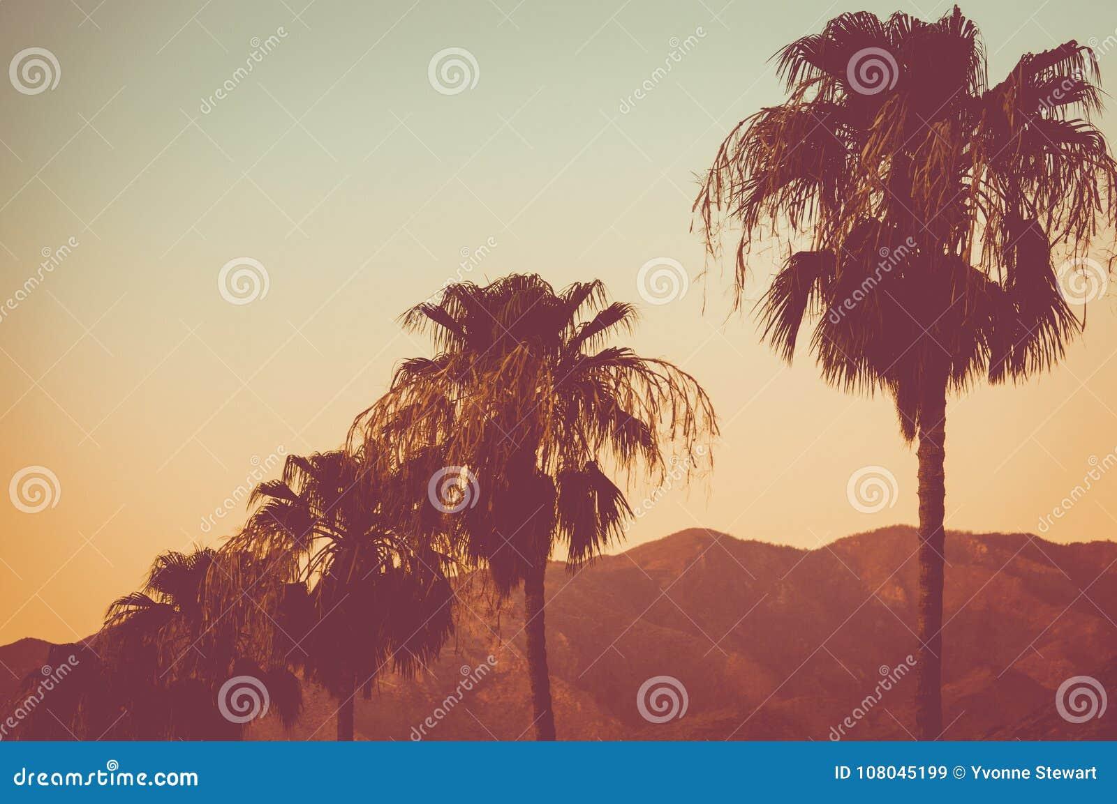 Rząd drzewka palmowe i góry przy zmierzchu palm springs