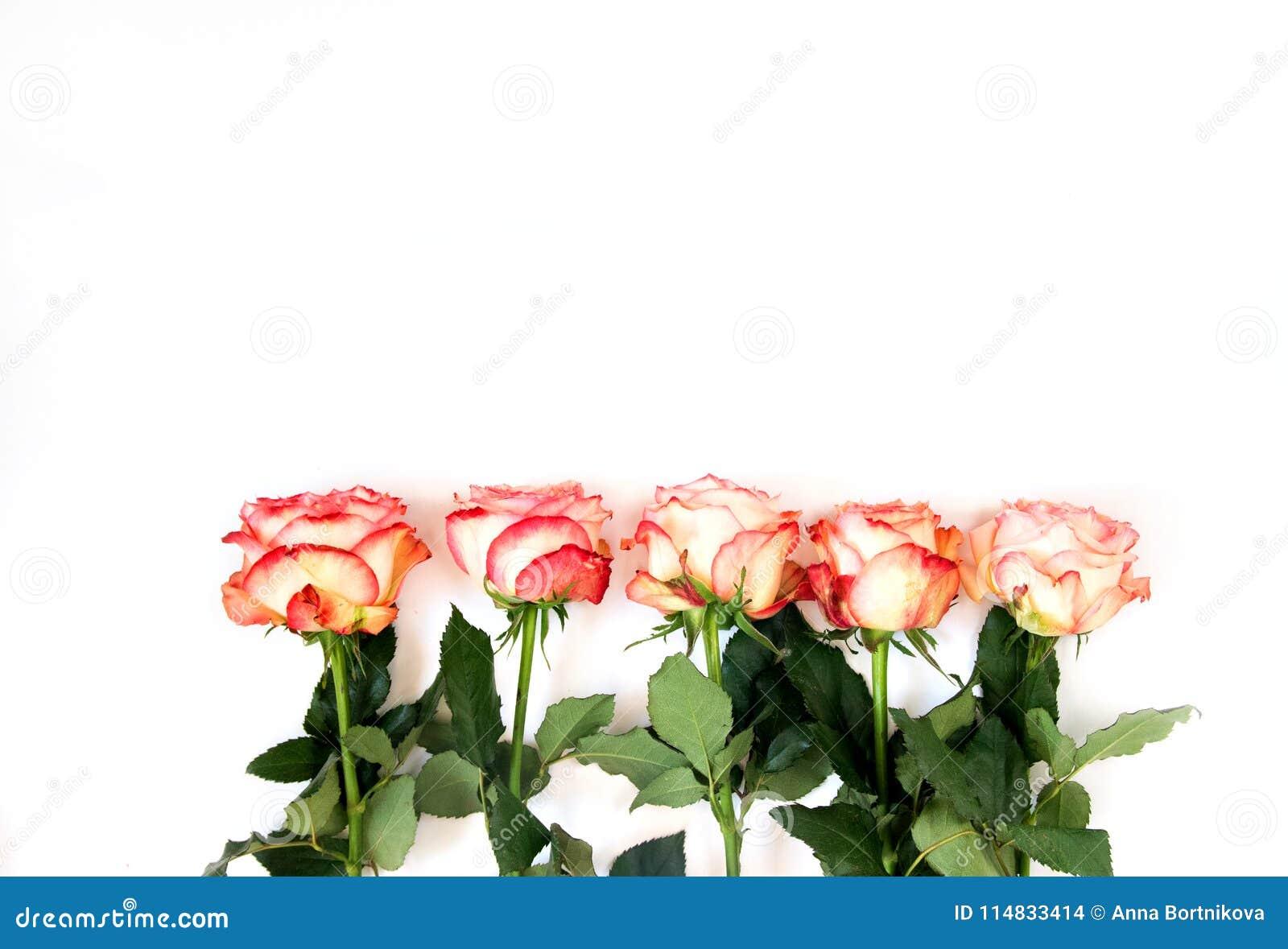 Rząd pięć róż