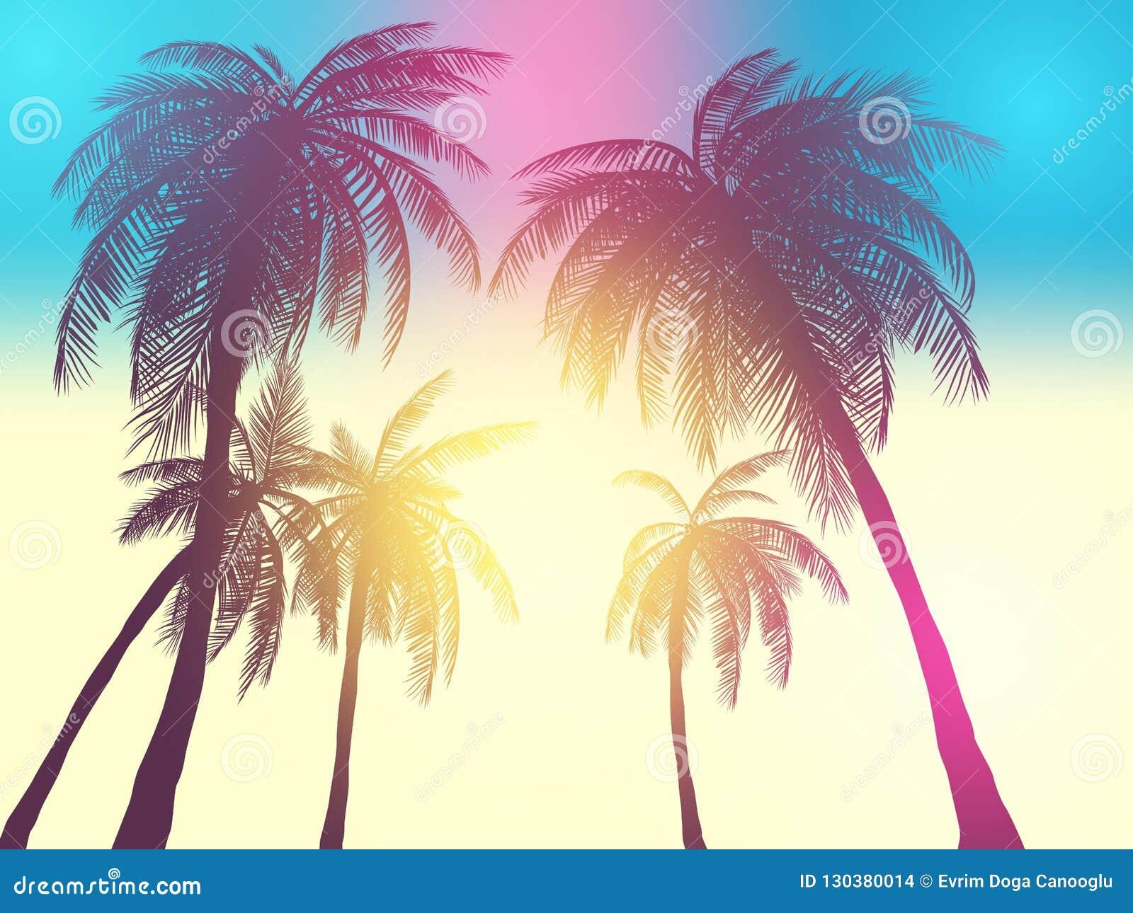 Rząd zwrotników drzewka palmowe przeciw zmierzchu niebu Sylwetka wysocy drzewka palmowe Zwrotnika wieczór krajobraz Gradientowy k