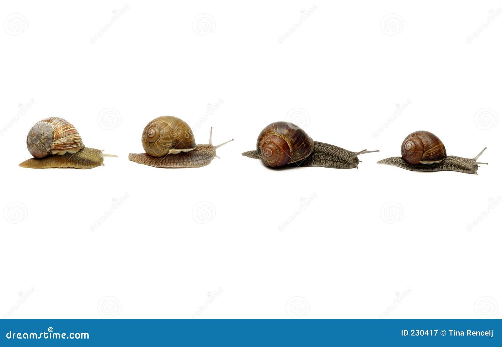 Rządy ślimaków