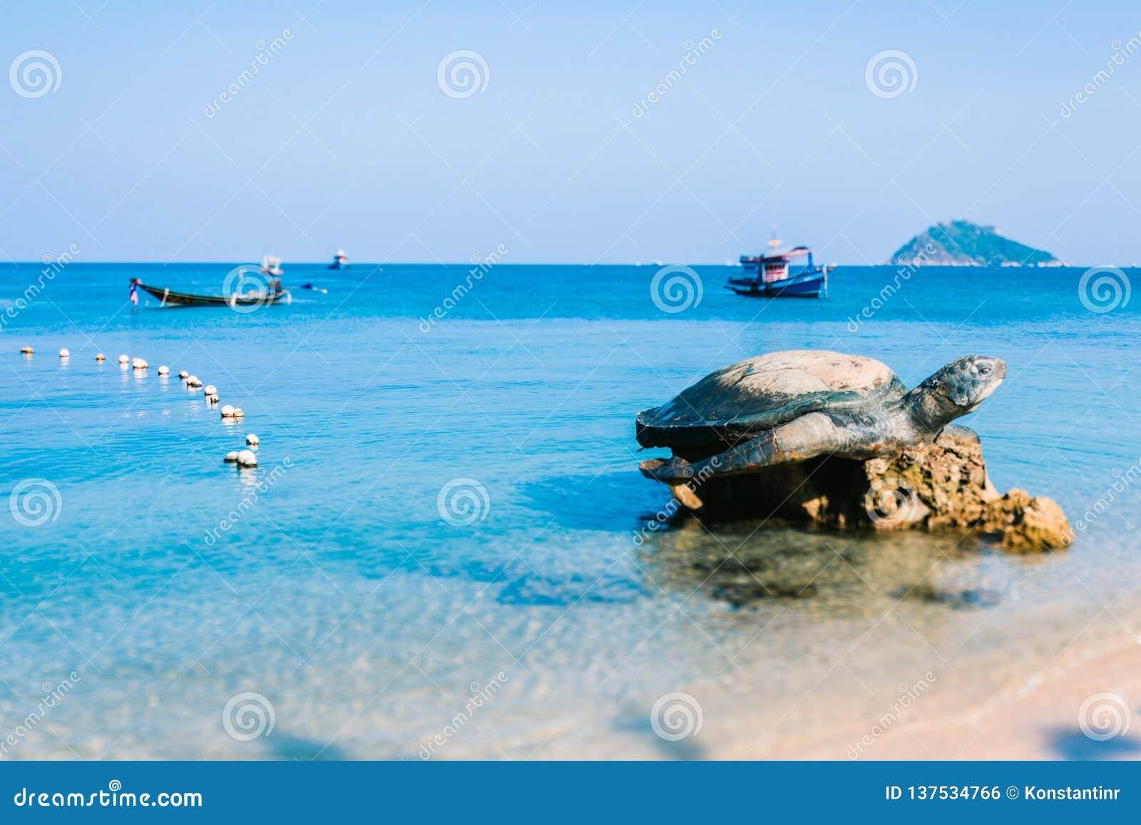Rzeźba żółw Symbol wyspa Koh Tao Żółw na oceanu tle