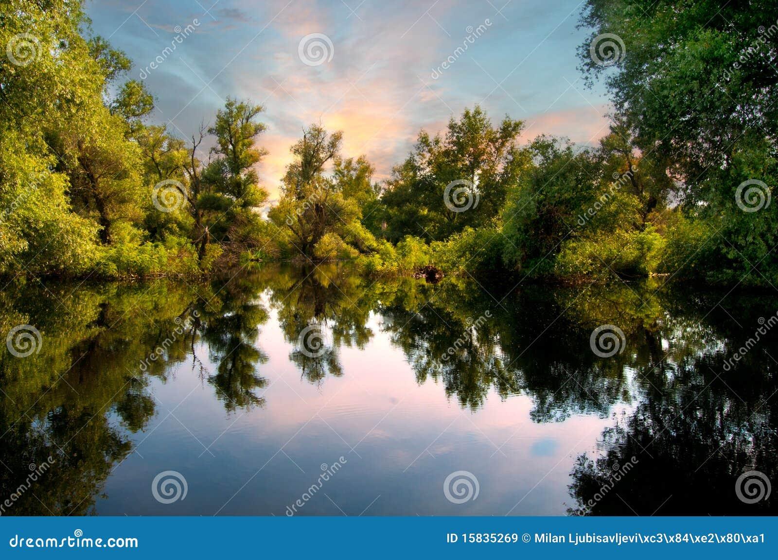 Rzeczni Danube bagna