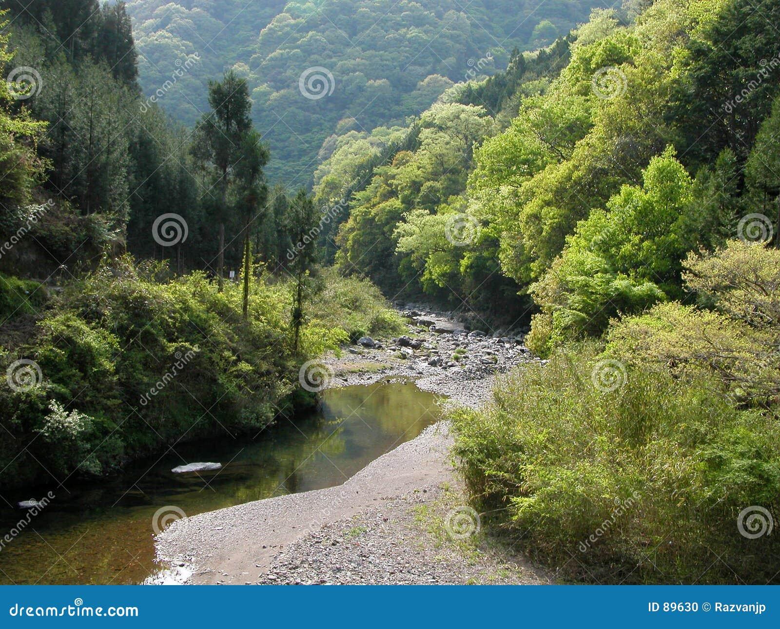 Rzeka leśna