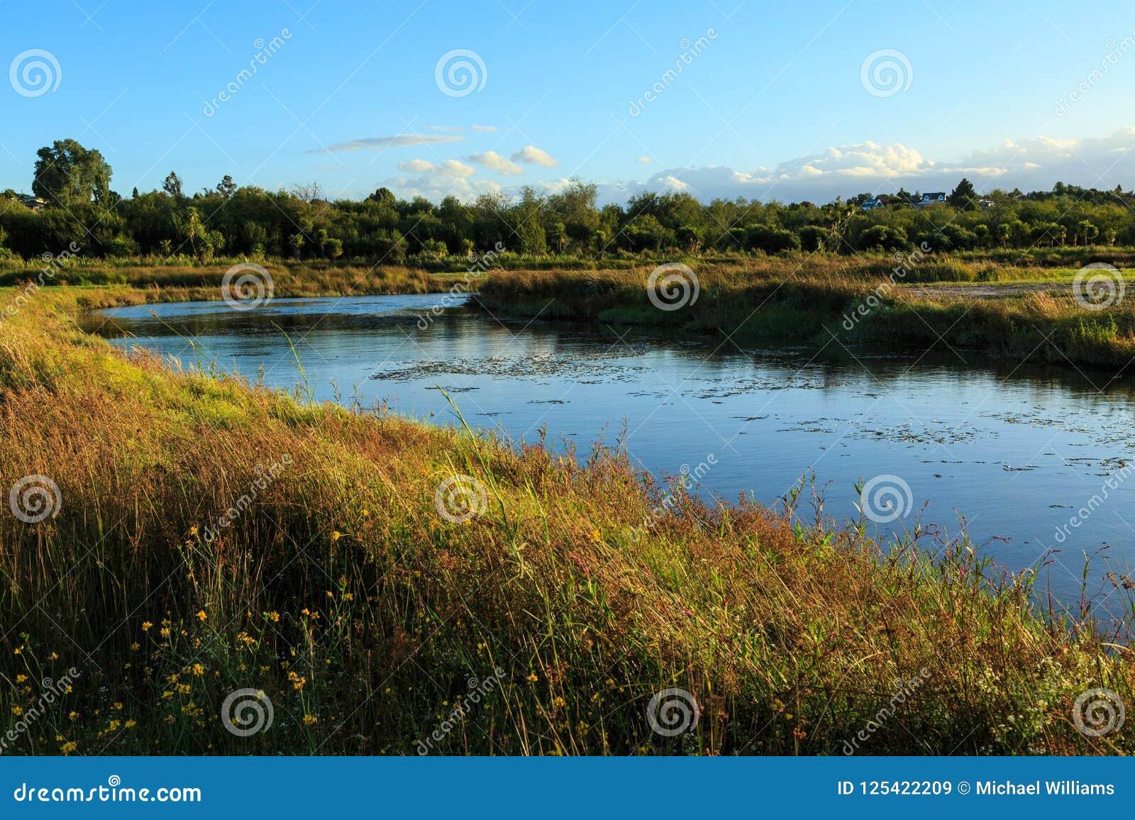 Rzeka meandruje przez trawiastej łąki