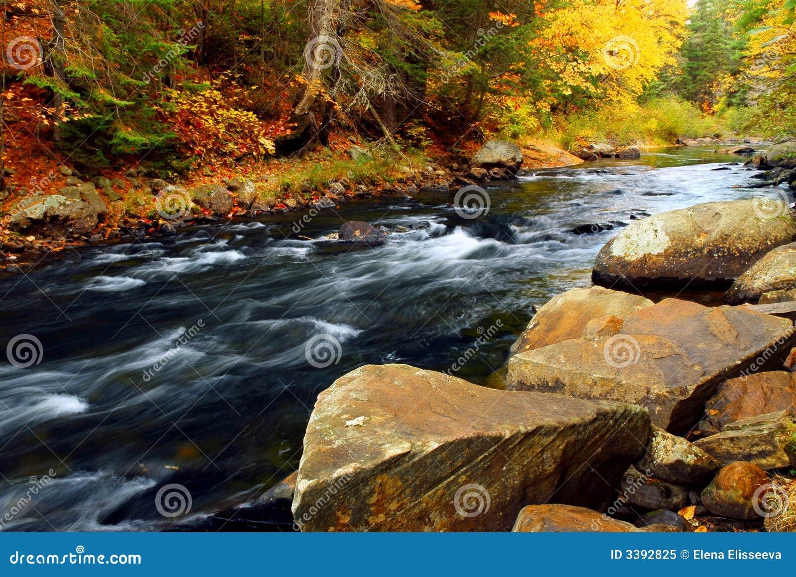 Rzeka upadku lasu