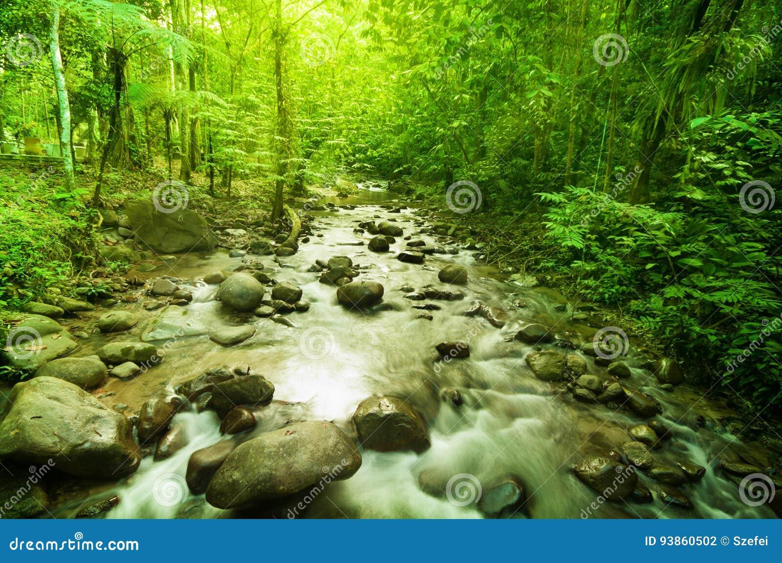 Rzeka w dżungli