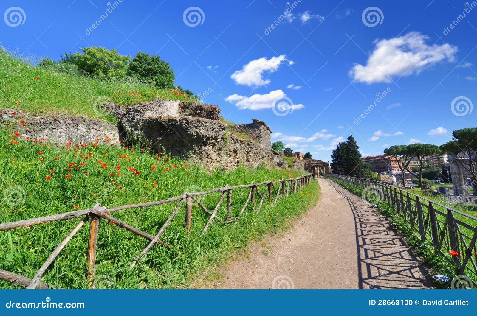 Rzymianów maczki wzdłuż ścieżki przy palatynu wzgórzem w Rzym i ruiny, Włochy
